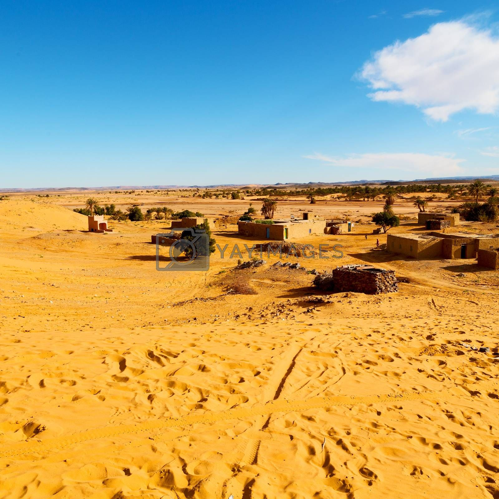 sahara      africa in morocco  palm the old contruction and  his by lkpro