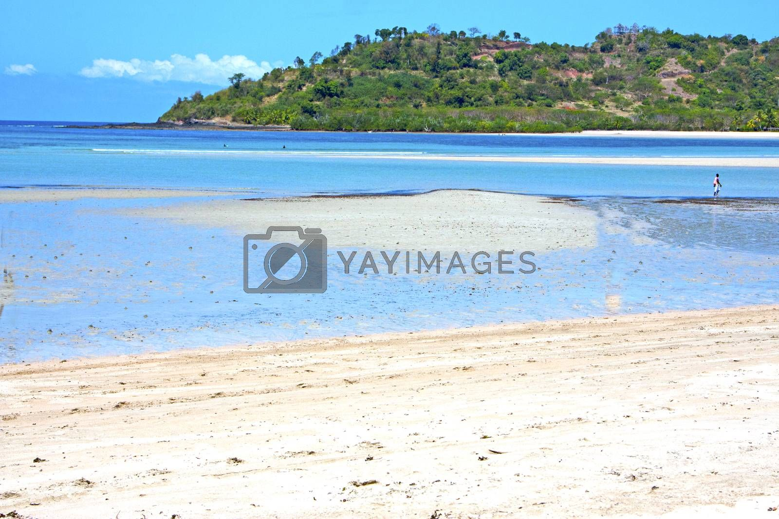 beautiful andilana beach seaweed  indian ocean   by lkpro