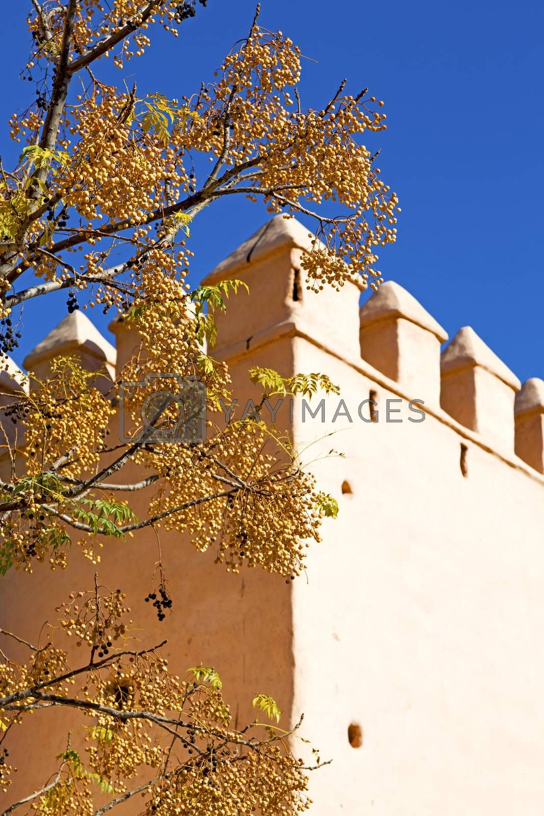 brown  old ruin in     flower   morocco and sky  near the tower by lkpro