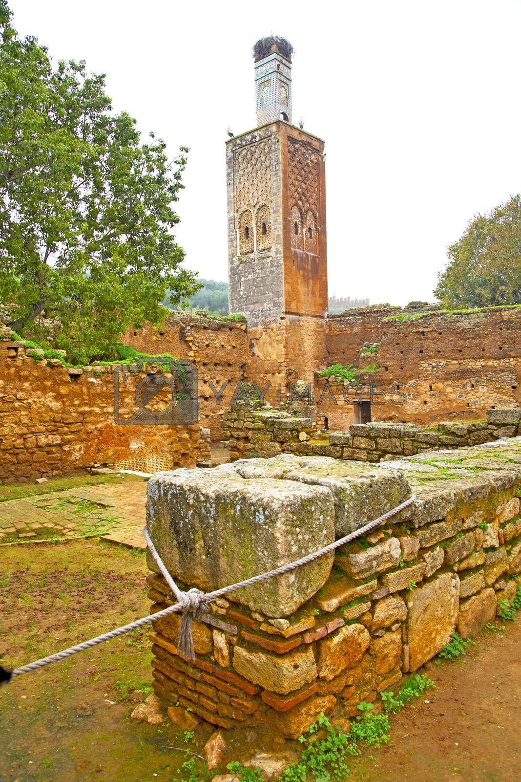 chellah  in         africa the old roman deteriorated monument   by lkpro