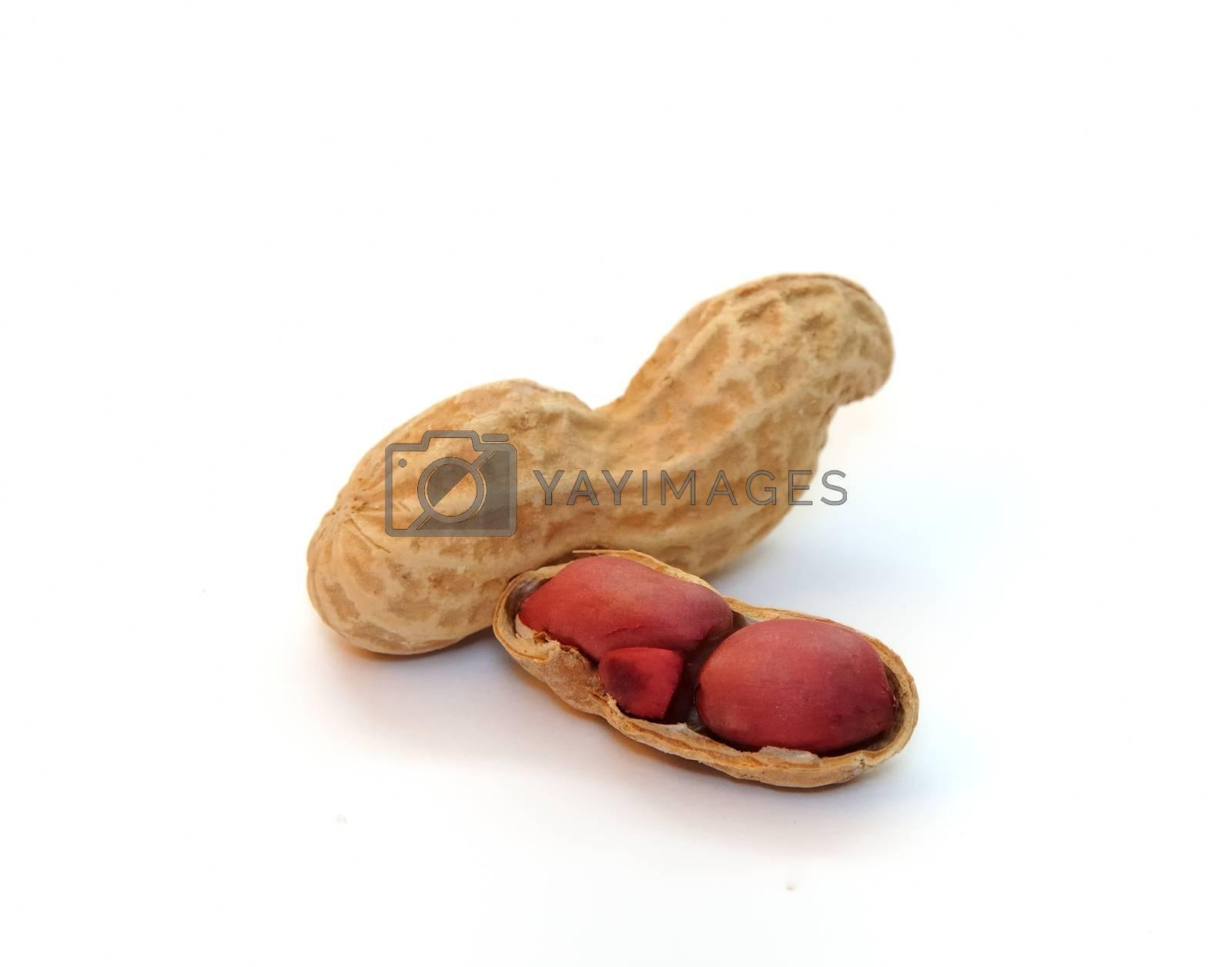 peanuts by kimmik