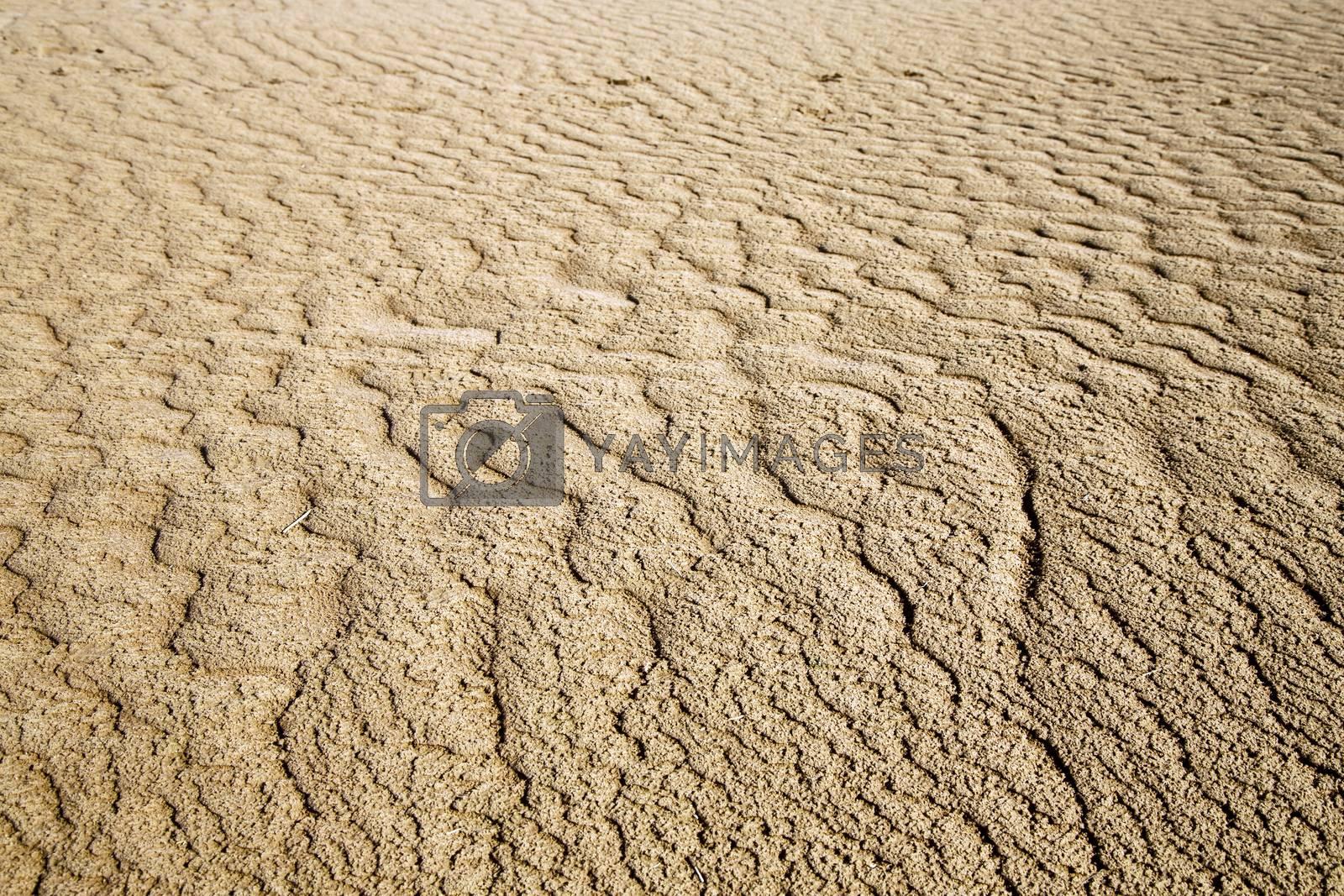 afric  brown   dune   sahara t line by lkpro