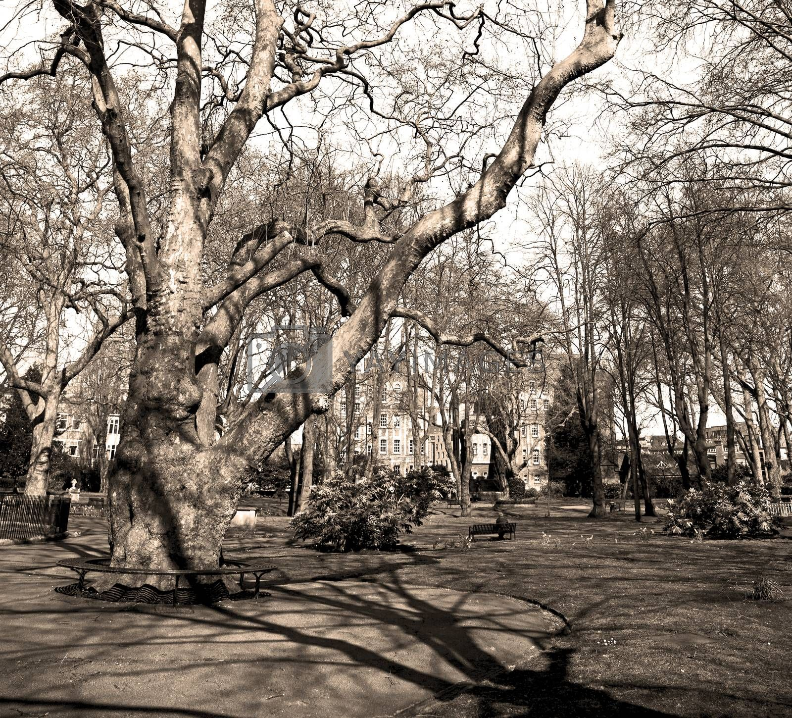 park in london spring sky and old dead tree  by lkpro