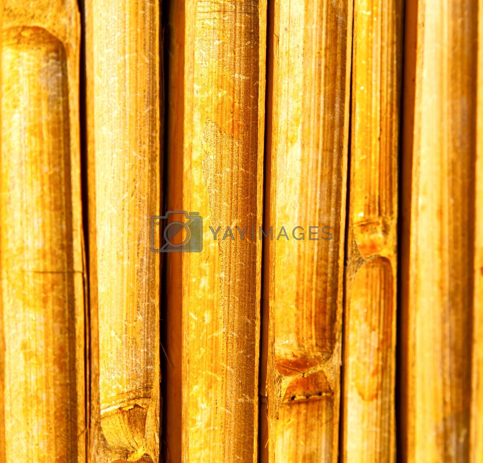cross bamboo  kho phangan bay   and south   by lkpro