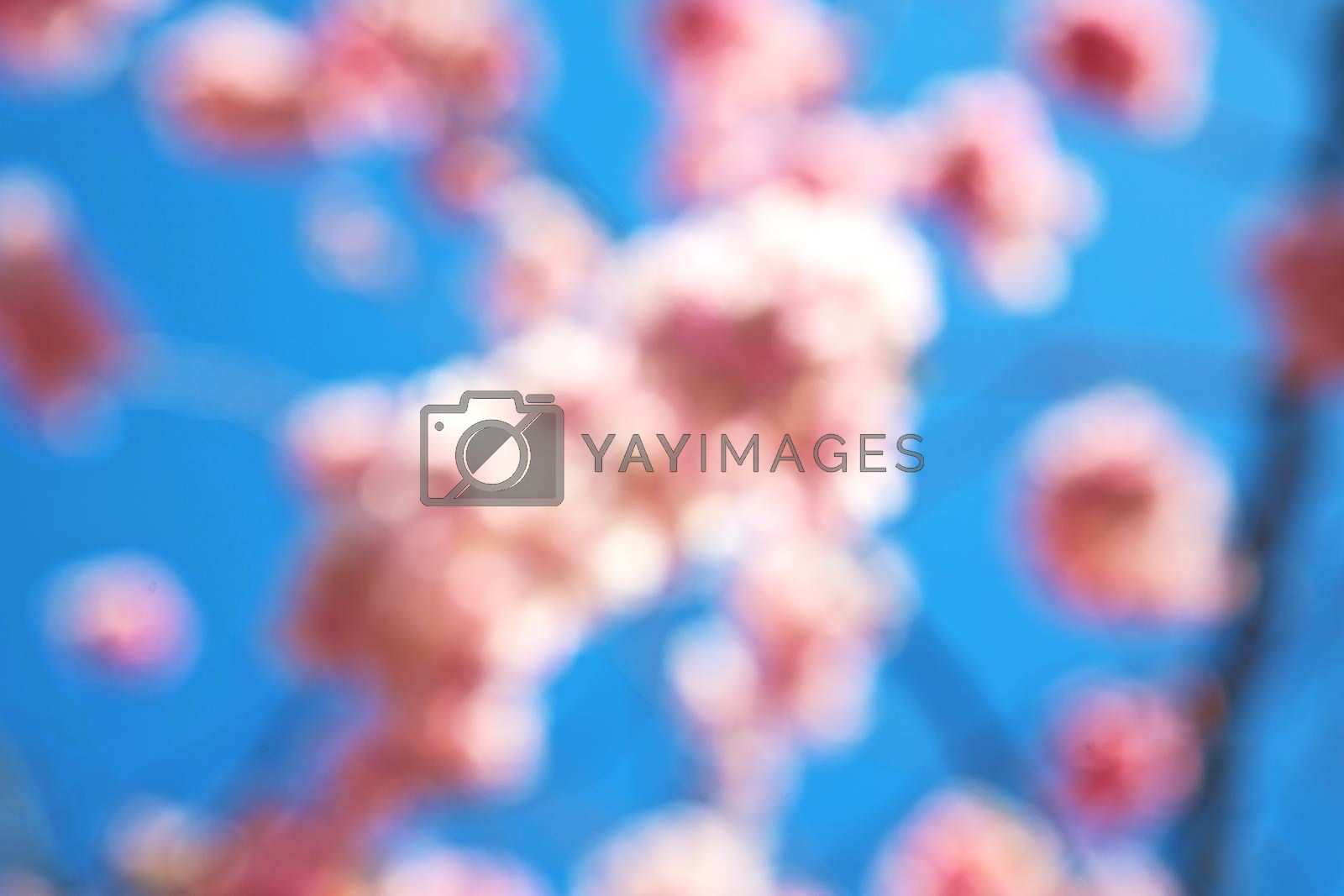 the white   tree and blossom flowers natural by lkpro