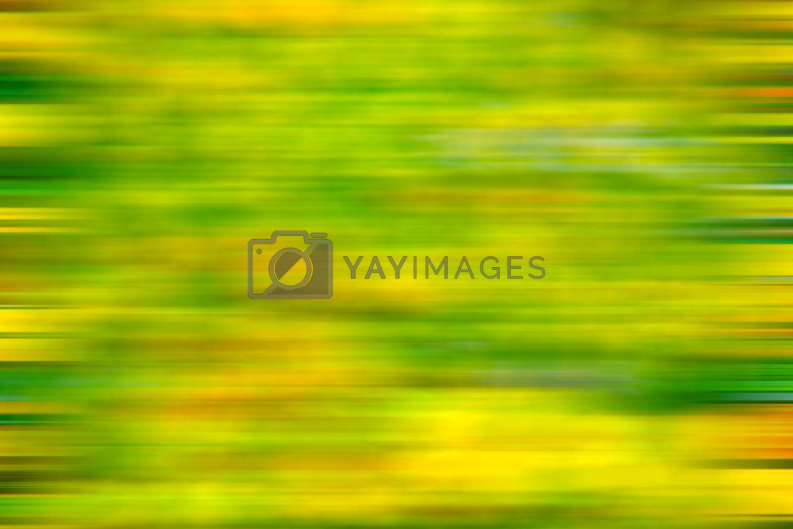 in london yellow flower field nature and spring by lkpro