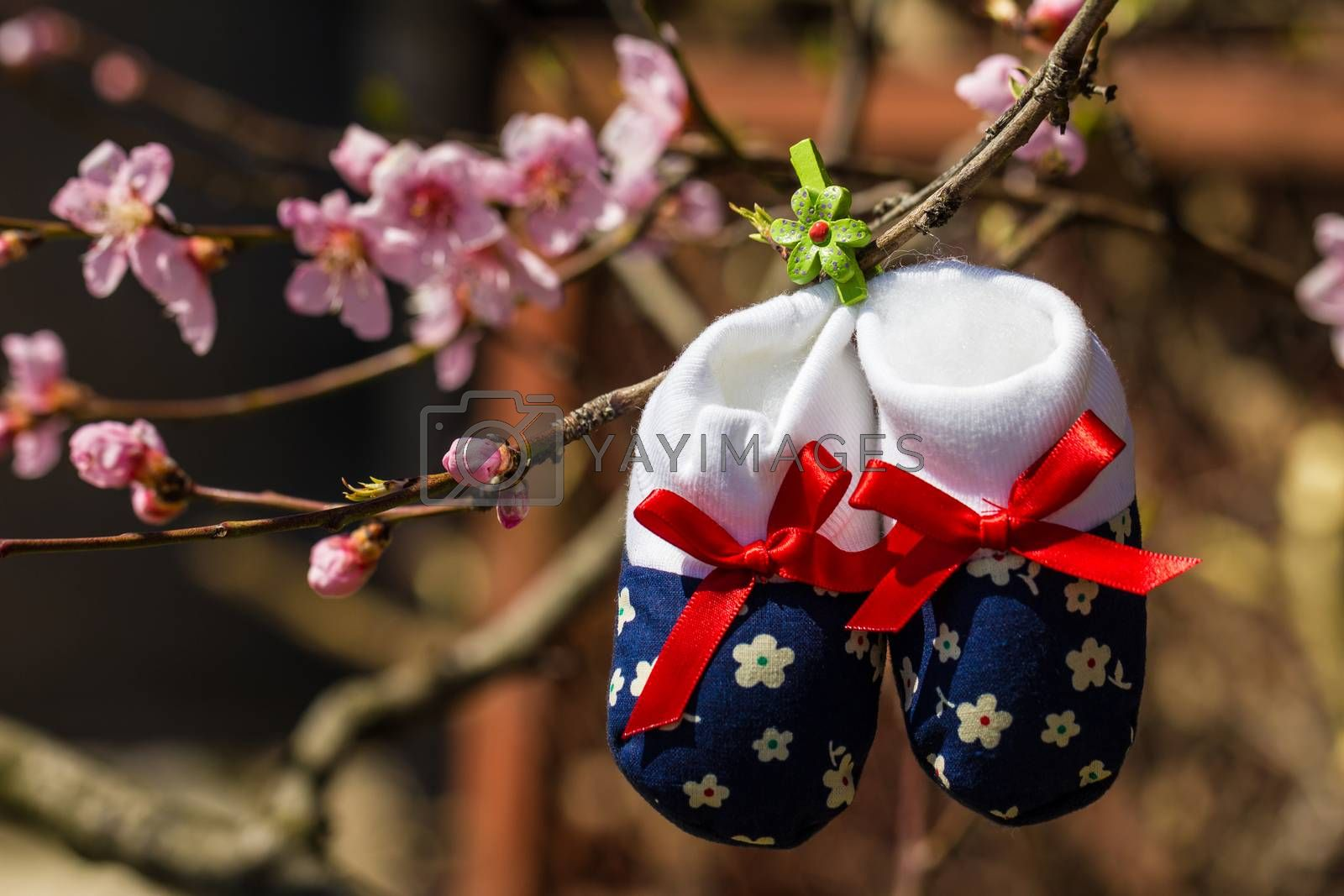 Baby slippers hanging on a branch of blossoming tree by maggee