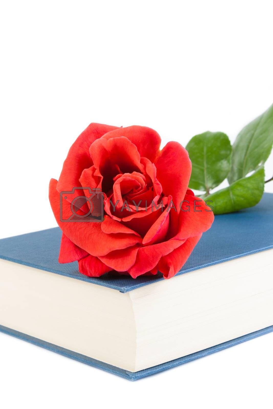 detail of red rose on closed book on white background