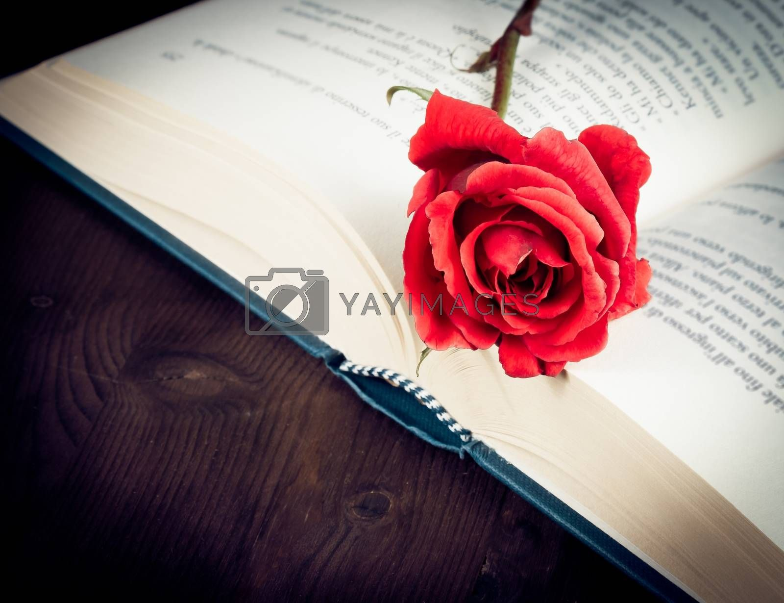 detail of red rose on the open book on old wood background with space for text, old style