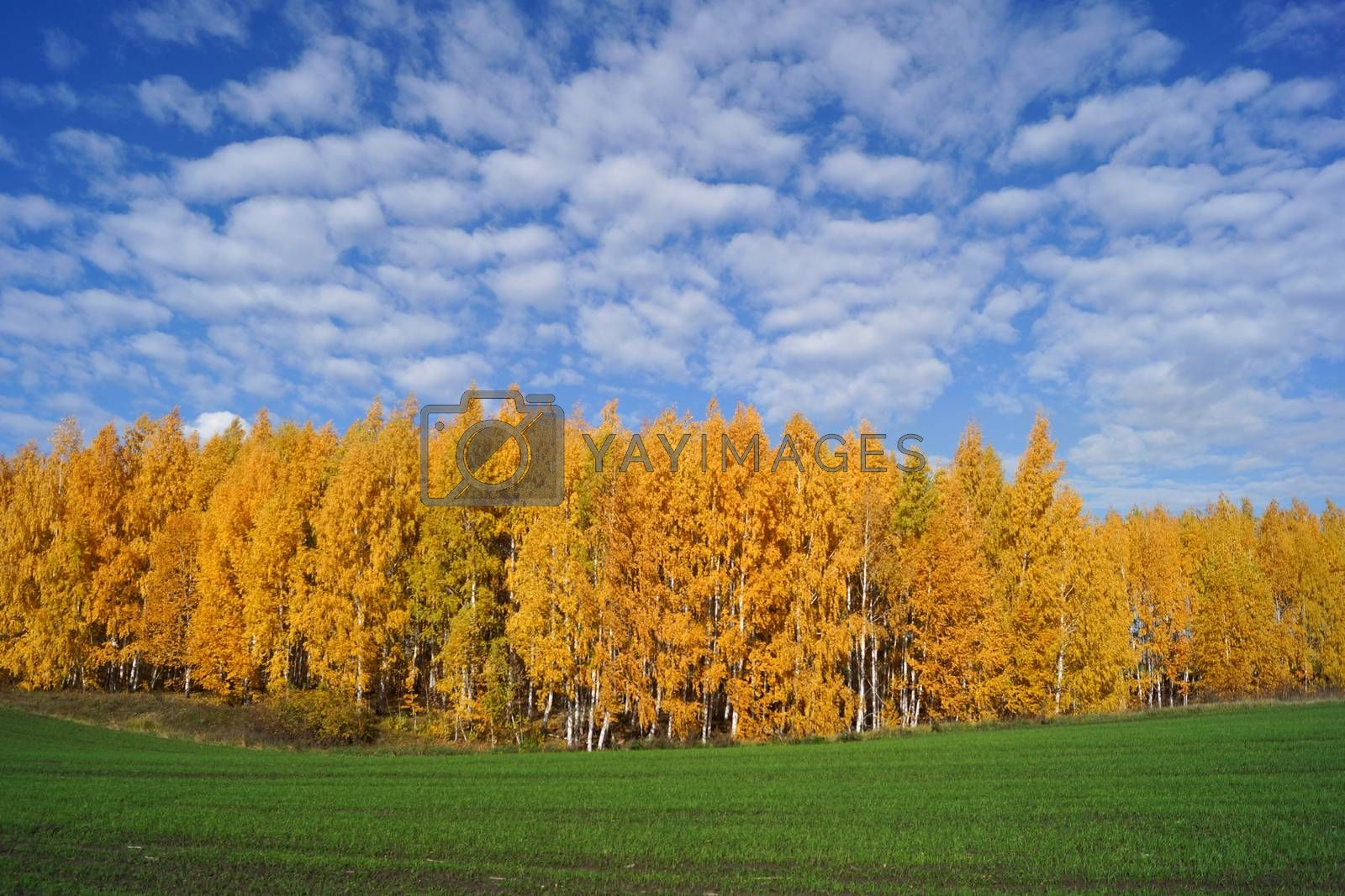 The photo shows a landscape of autumn meadow.
