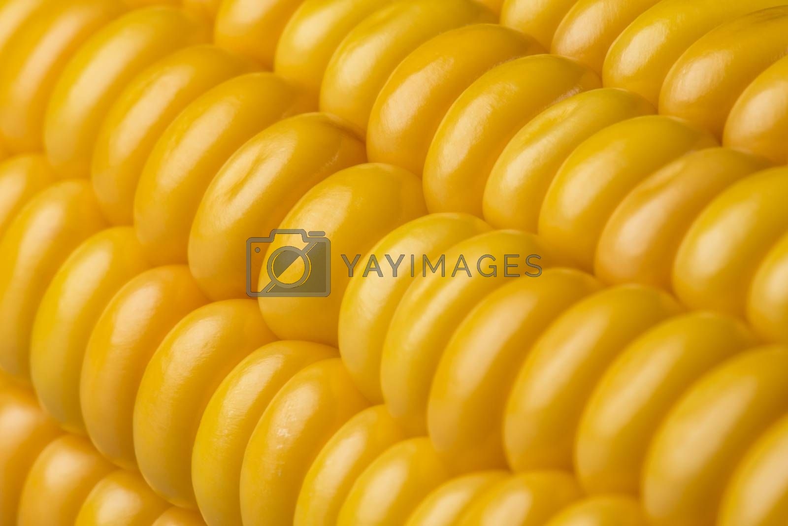 Abstract detail of corn  by Tofotografie