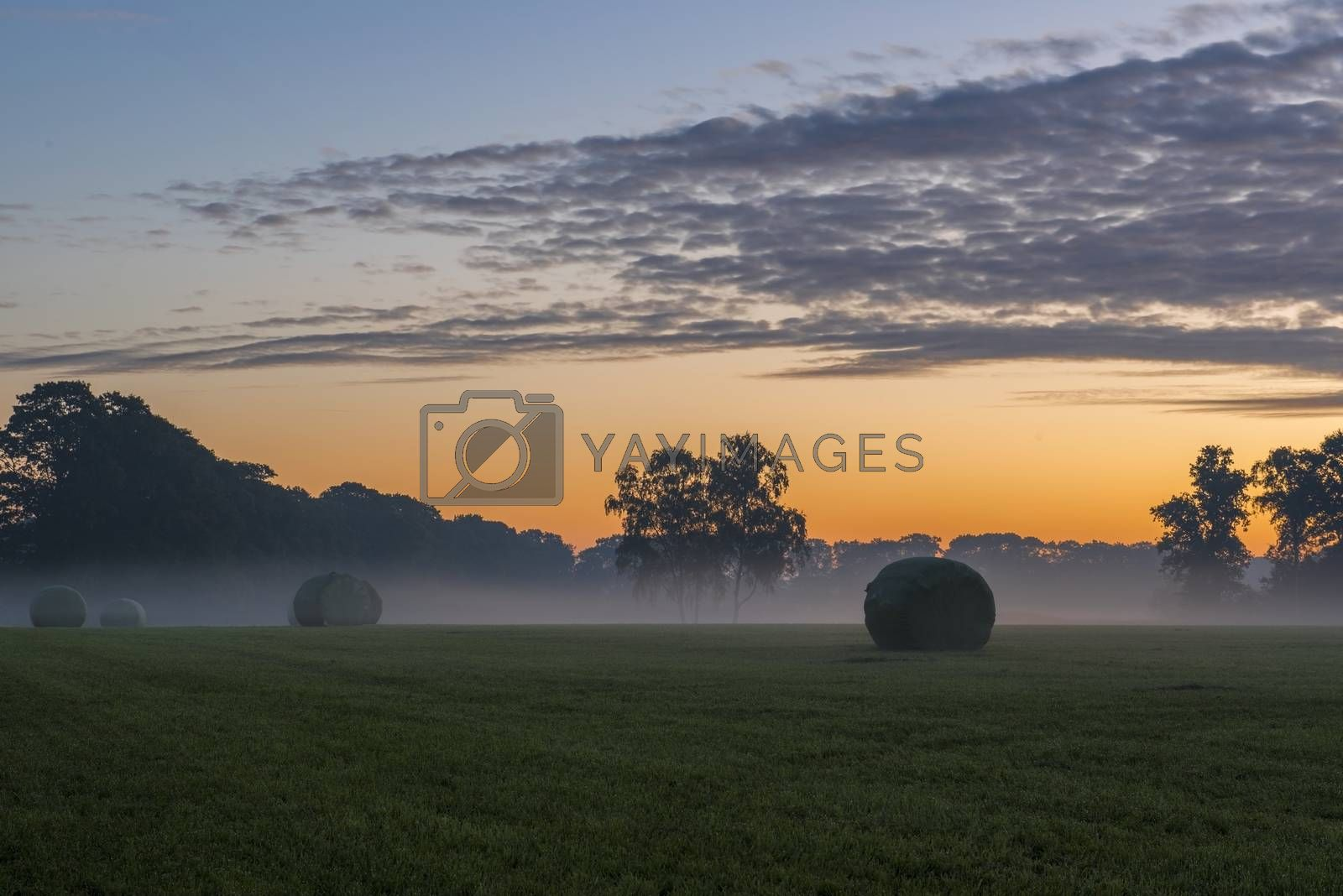 Packed roles grass in the early morning  by Tofotografie