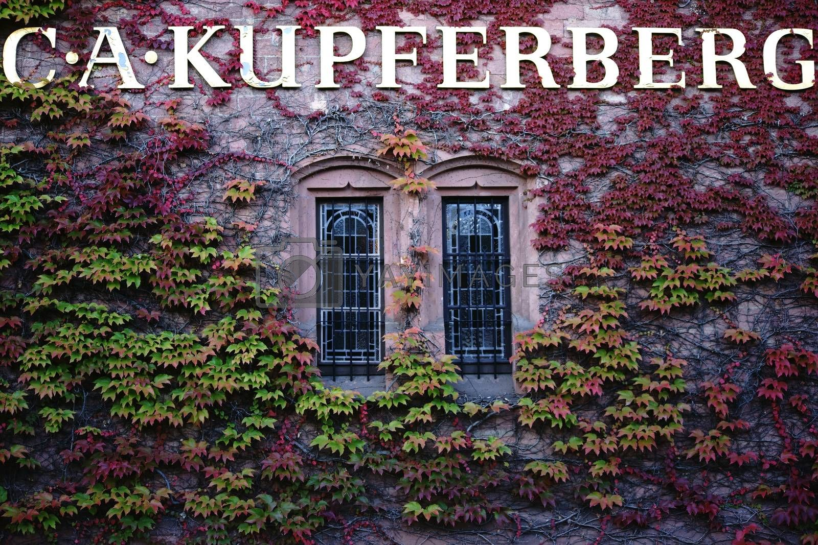 Mainz, Germany - September 19, 2015: The vine-covered facade of the headquarters of the company C.A. Kupferberg on September 19, 2015 in Mainz.