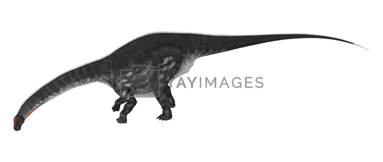 3D digital render of a dinosaur Apatosaurus isolated on white background