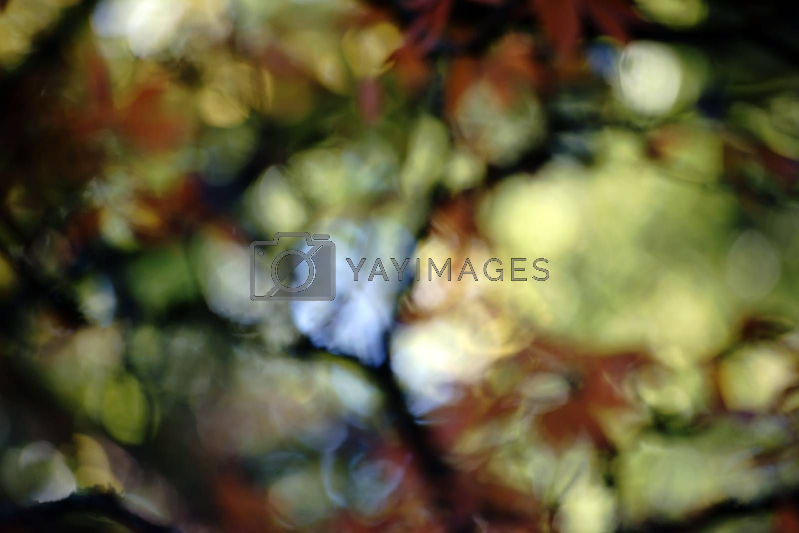 The blurred and abstract photograph of leaves and the treetop of a tree in autumn.