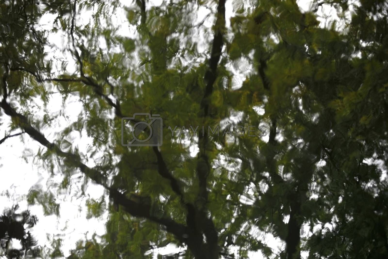 The abstract photograph of leaves roof and the treetop of a tree in the water.