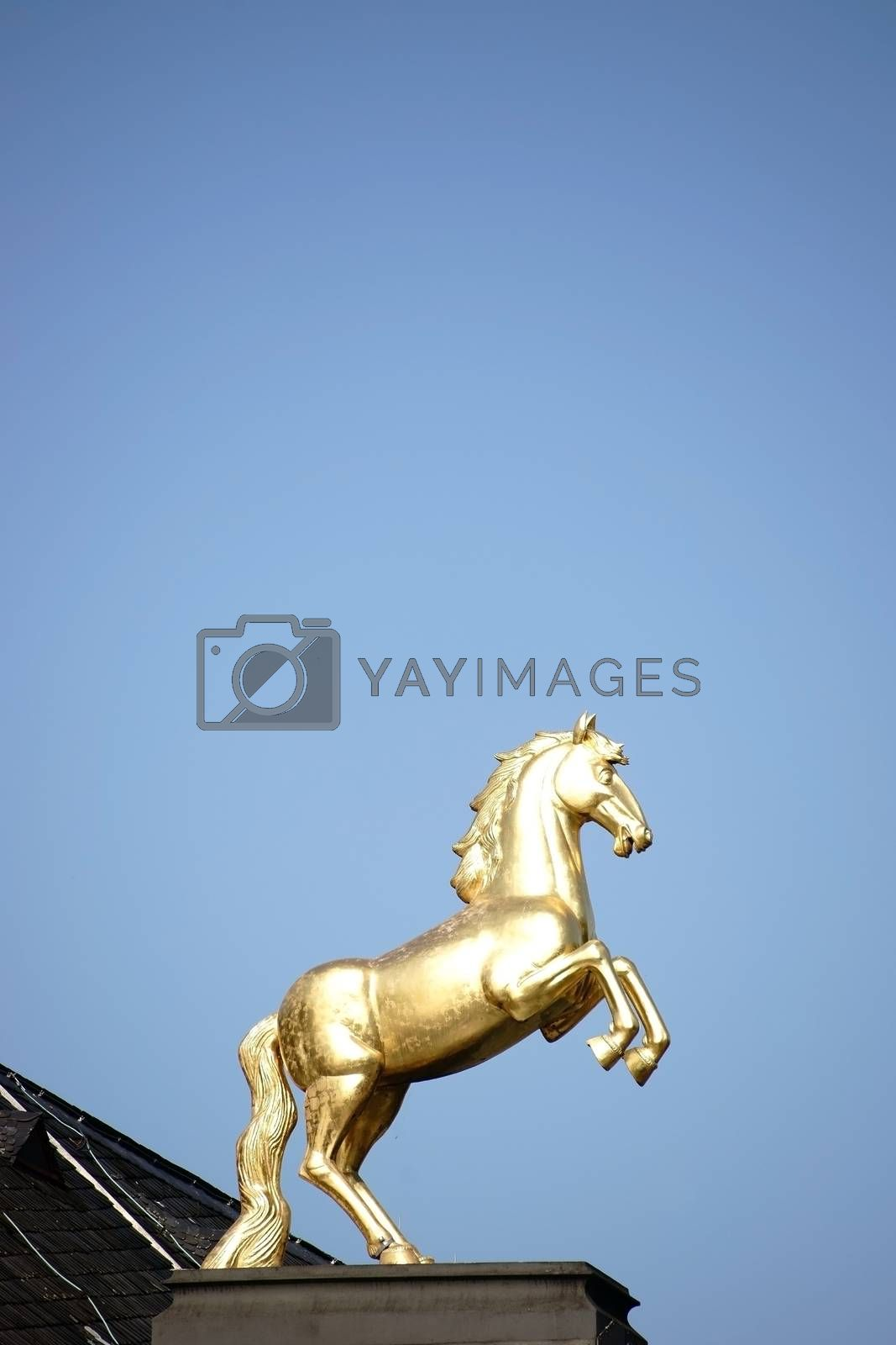 Mainz, Germany - October 02, 2015: The golden Ross sculpture on the roof of the main museum Mainz in the sunlight on October 02, 2015 in Mainz.