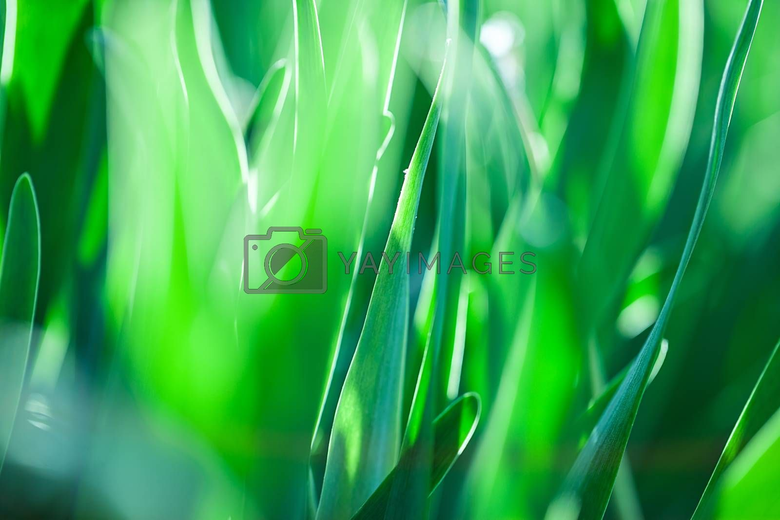 The Beautiful spring flowers background. Nature bokeh.