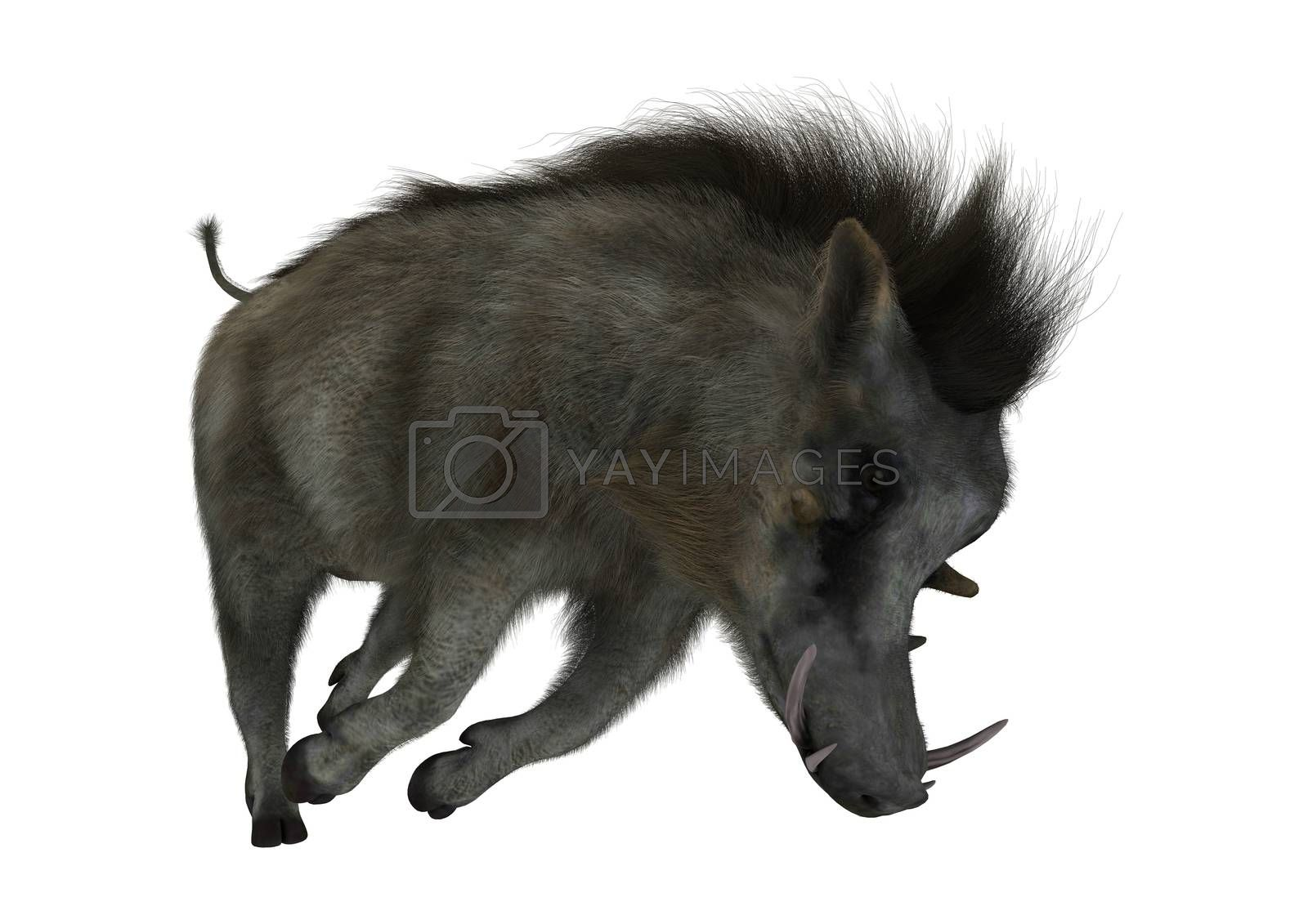 3D digital render of a warthog isolated on white background