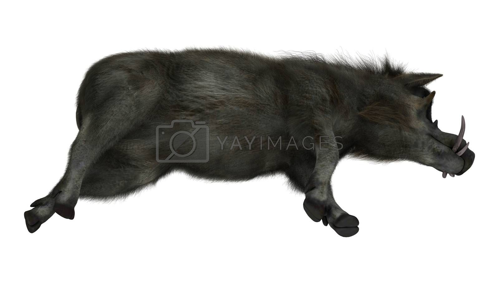 3D digital render of a warthog resting isolated on white background