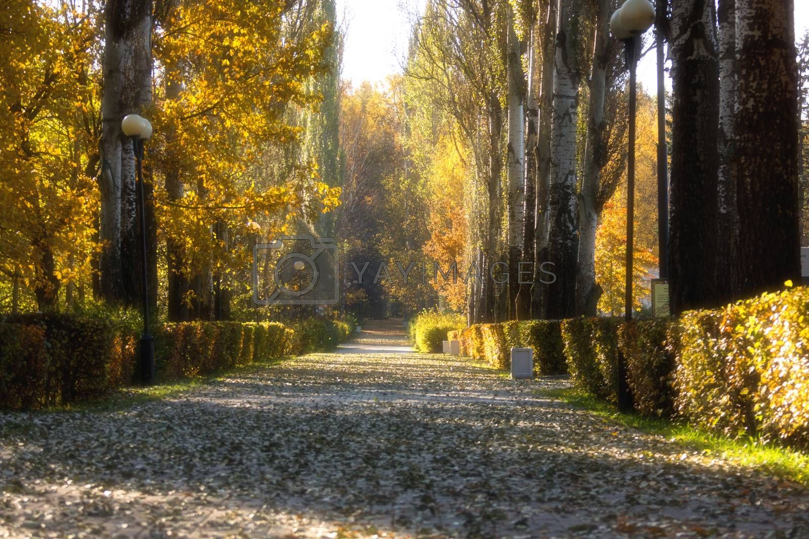 The photo shows autumn road backfilled yellow foliage
