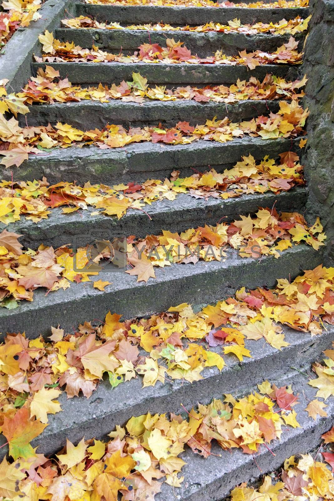Stone steps covered with yellow maple leaves at autumn