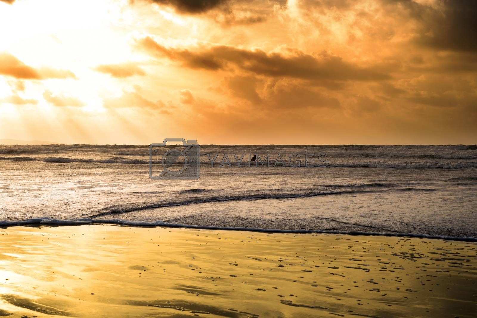 lone surfer surfing the winter waves at ballybunion beach on the wild atlantic way
