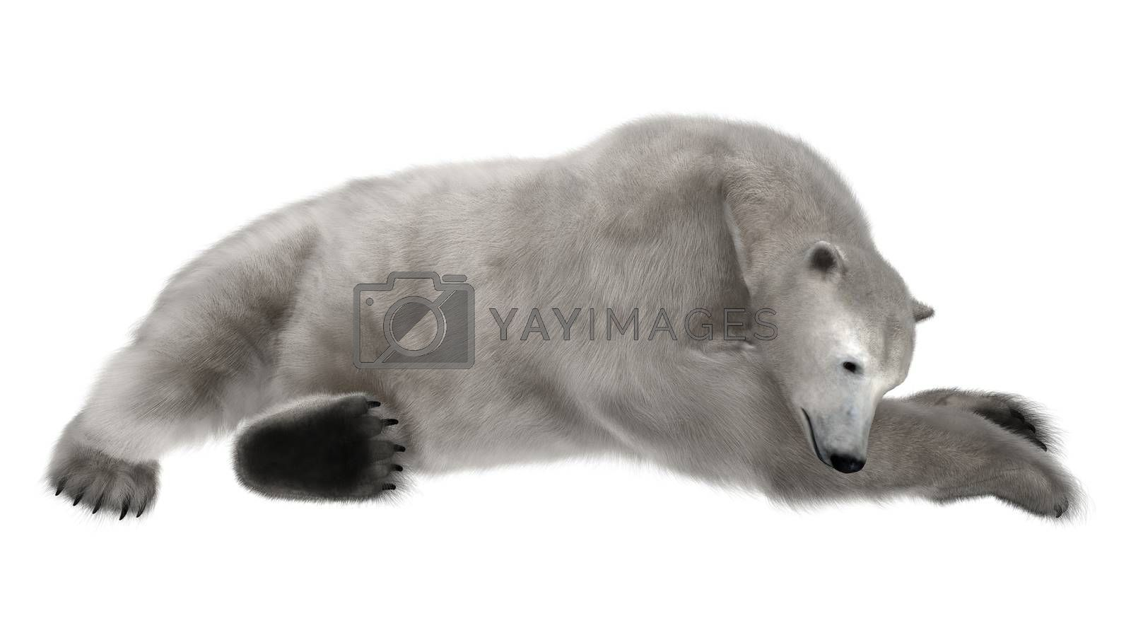 3D digital render of a polar bear resting isolated on white background