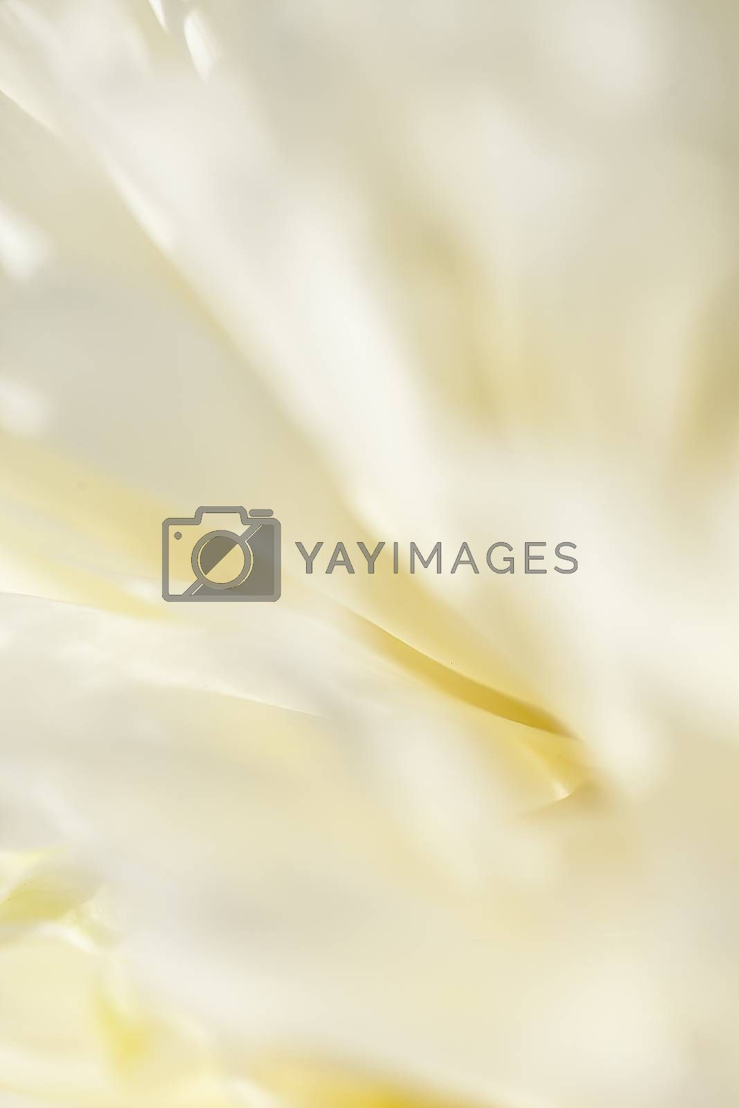 Royalty free image of Abstract beautiful gentle spring flower background.  Closeup with soft focus. Sweet color by H2Oshka