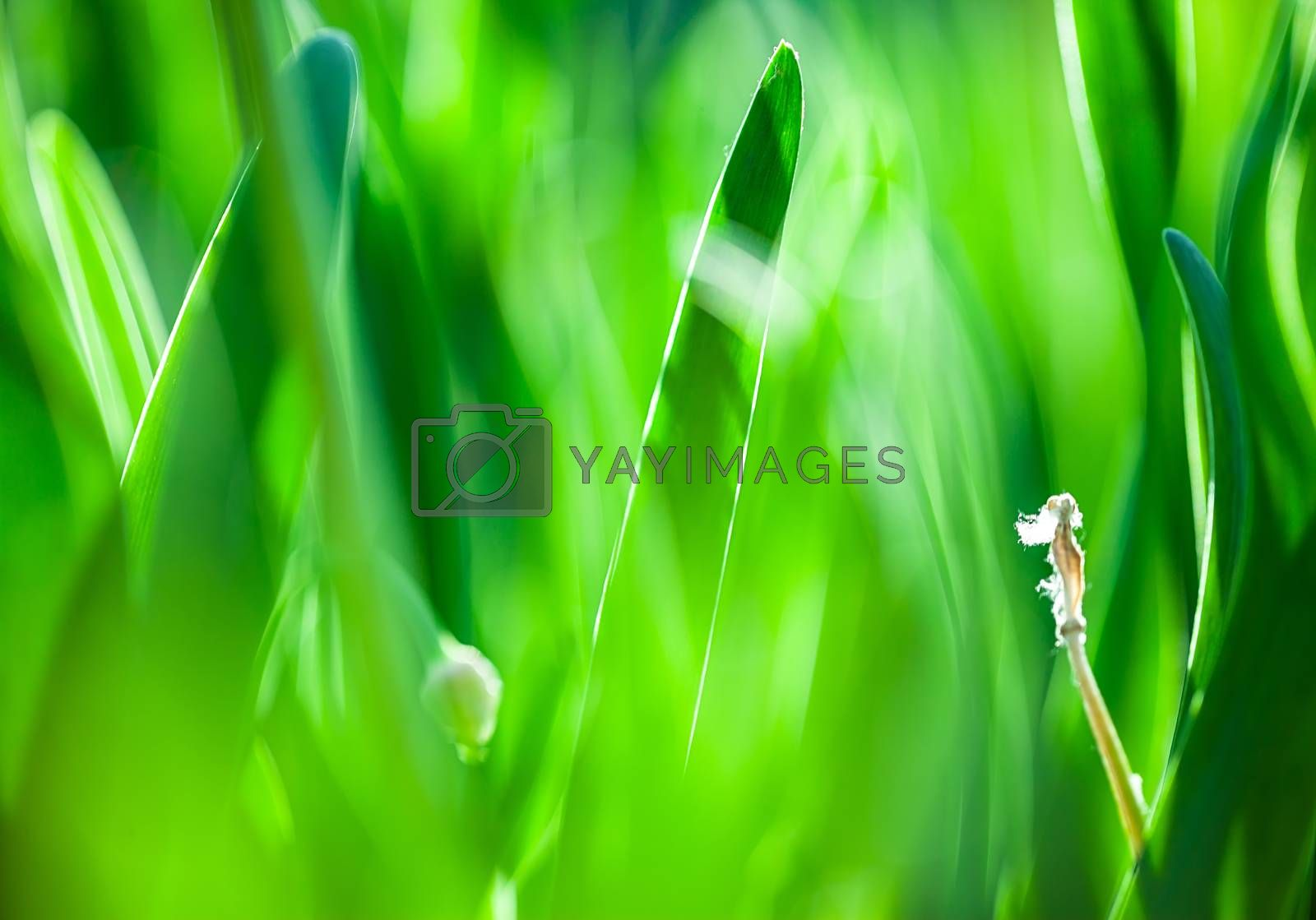 The Beautiful spring flowers background. Nature bokeh