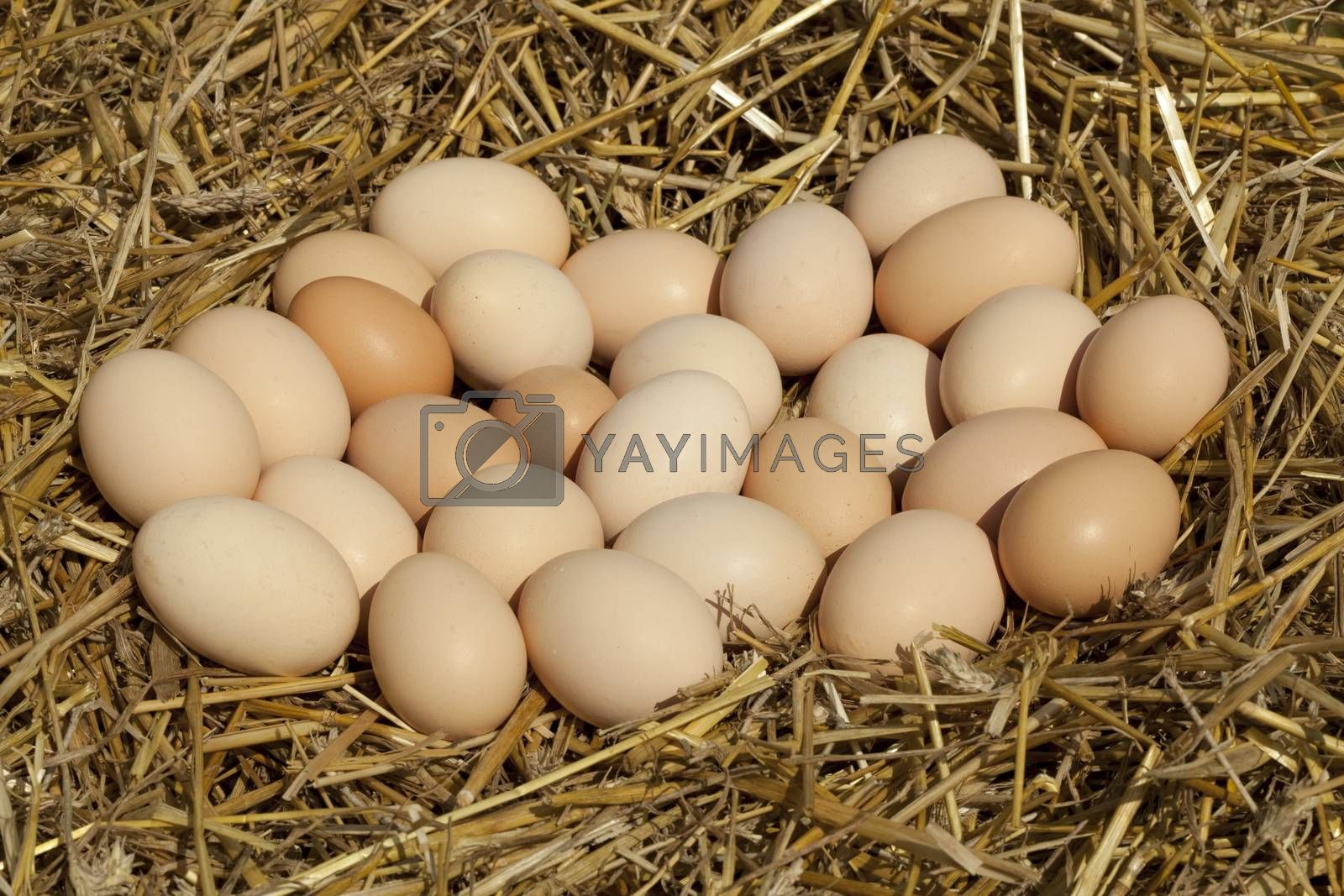 a lot of quantity of eggs country on straw
