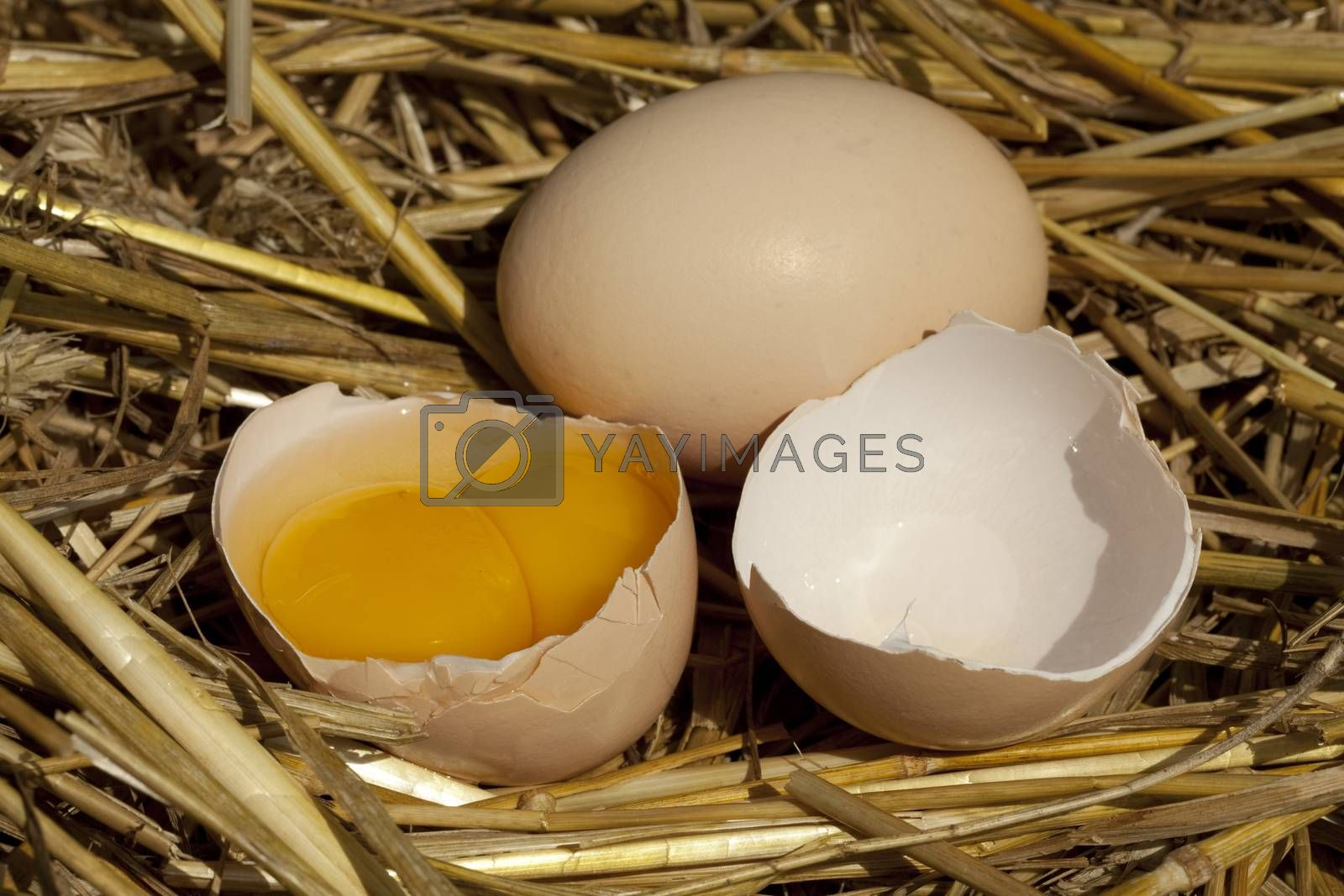 whole egg and broken egg on straw