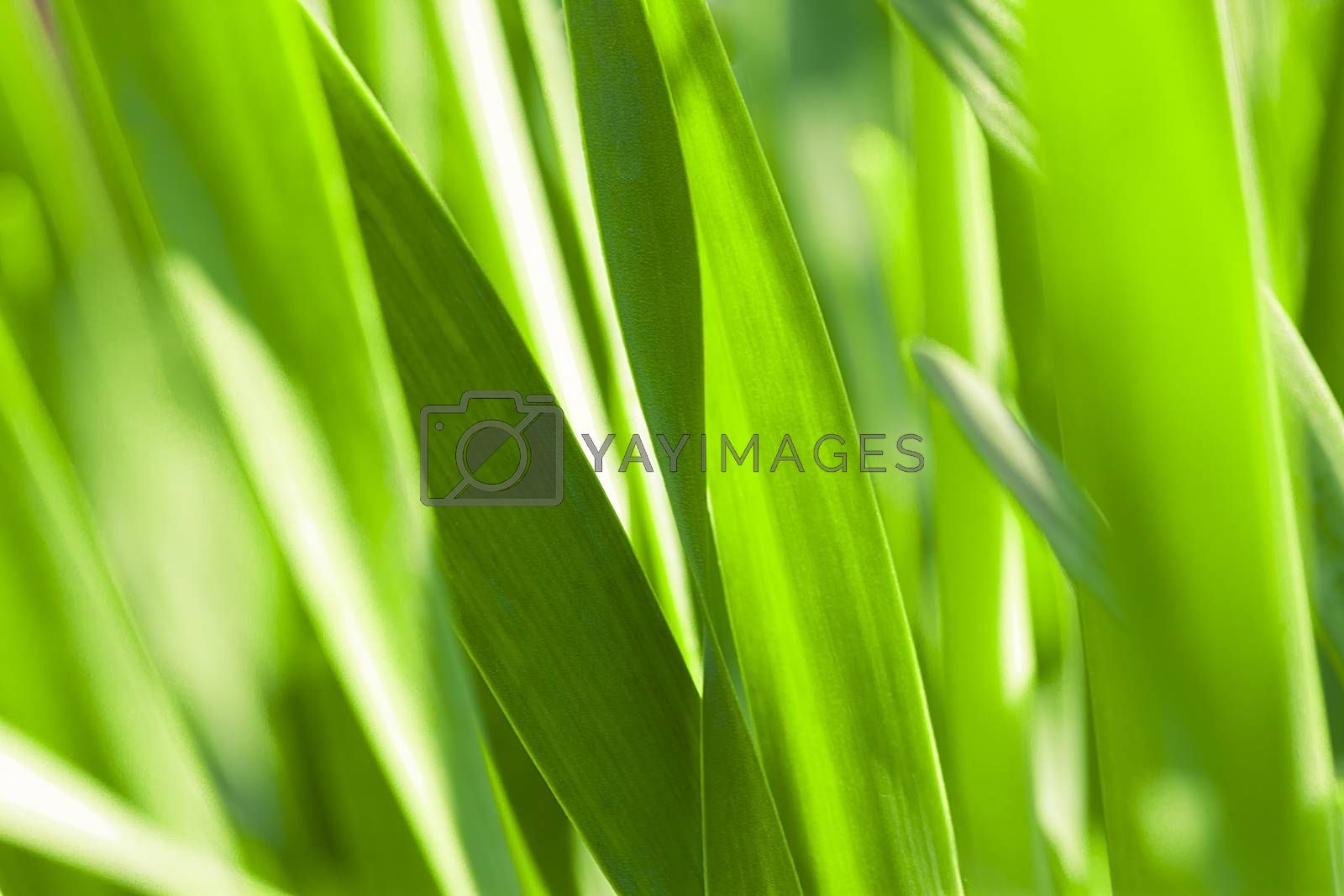 Abstract beautiful gentle spring flower background.  Closeup with soft focus.