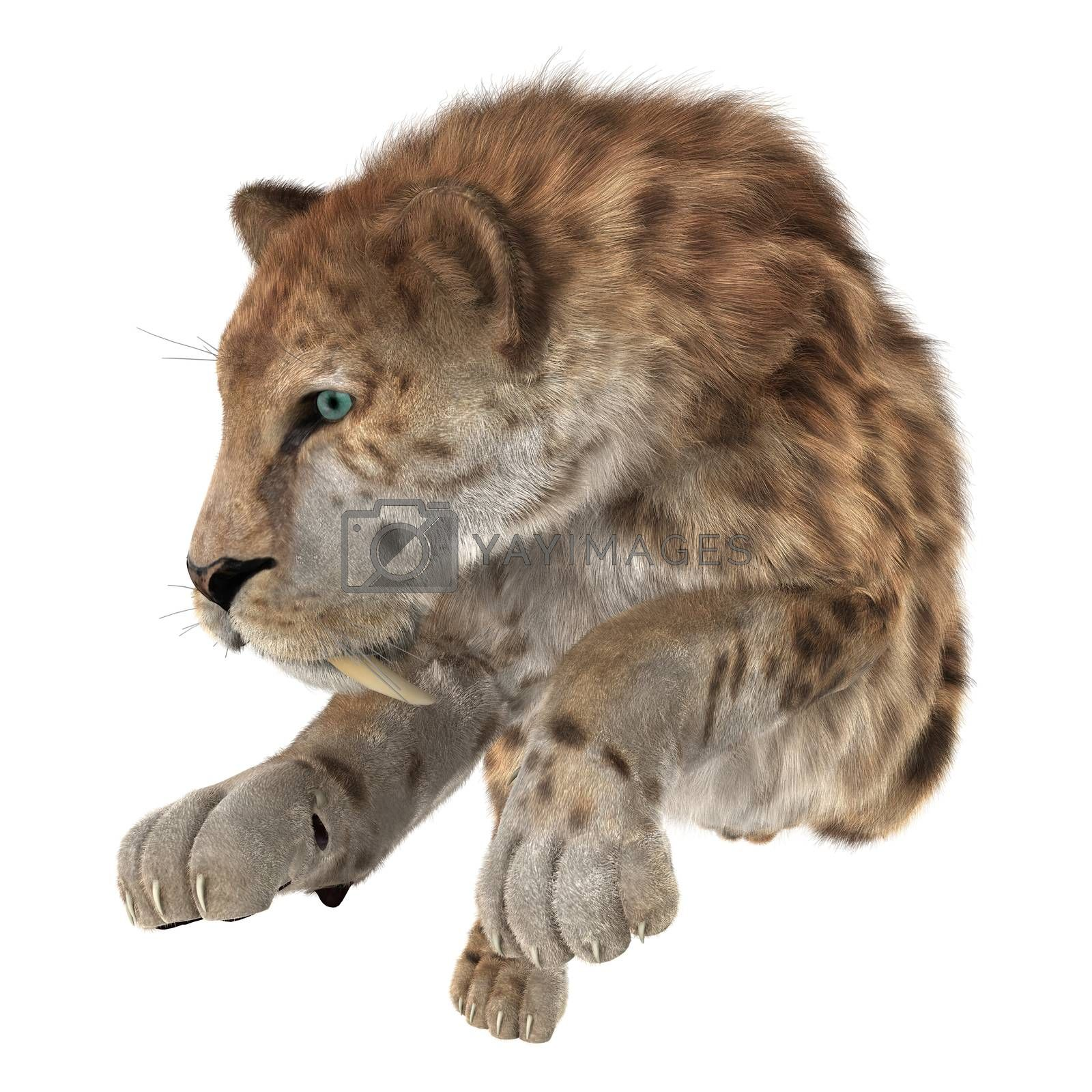 3D digital render of a big cat sabertooth isolated on white background