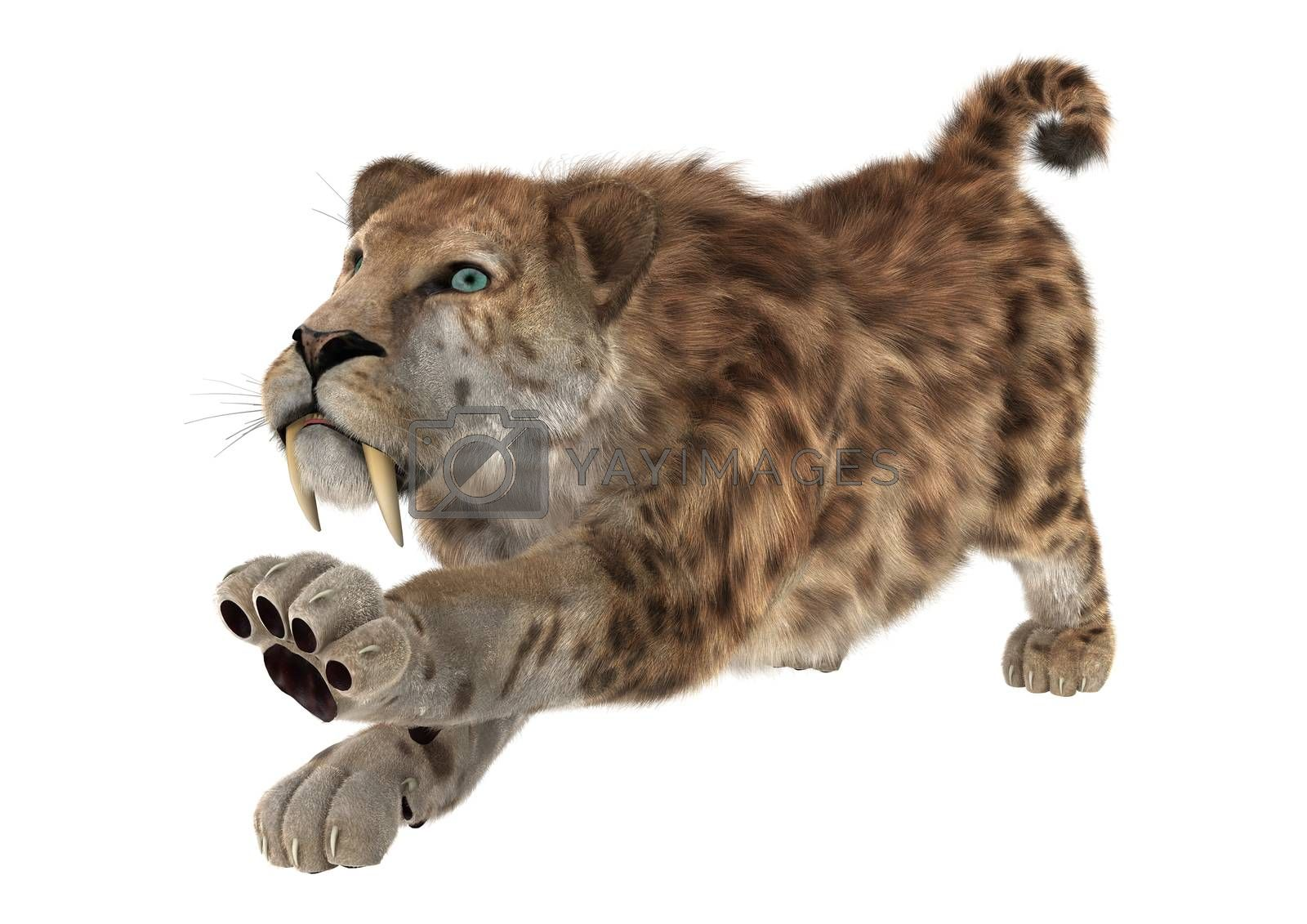 3D digital render of a big cat sabertooth stretching isolated on white background