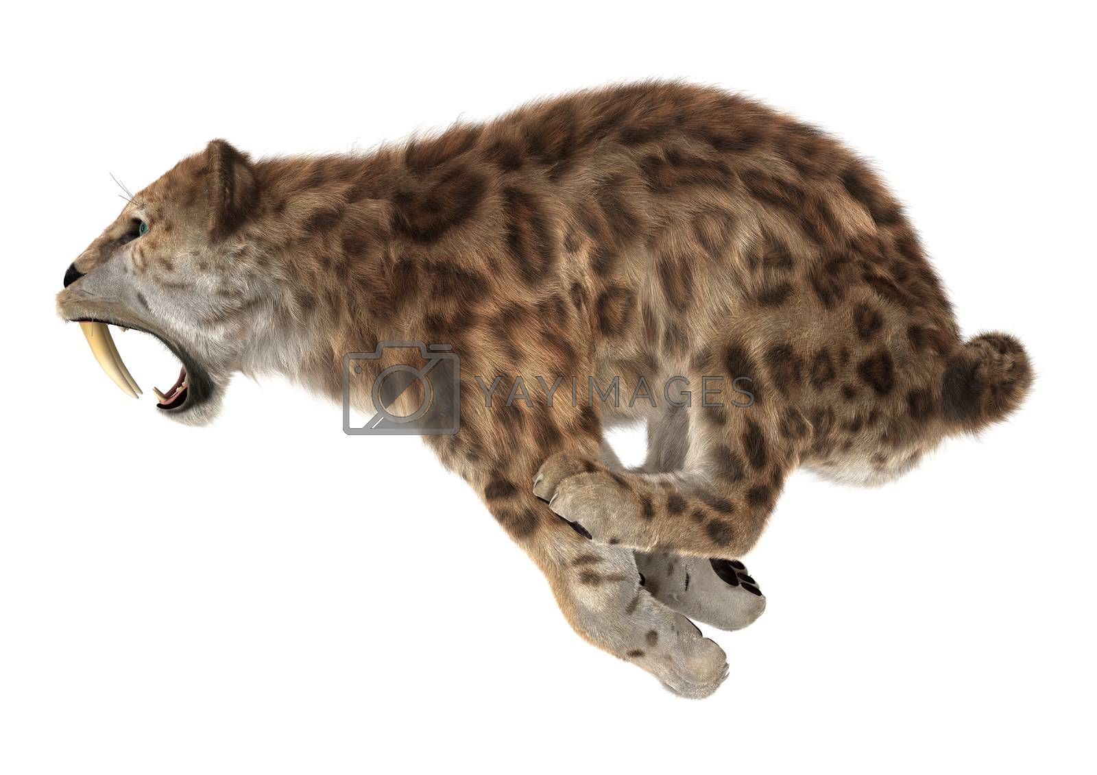 3D digital render of a big cat sabertooth jumping isolated on white background
