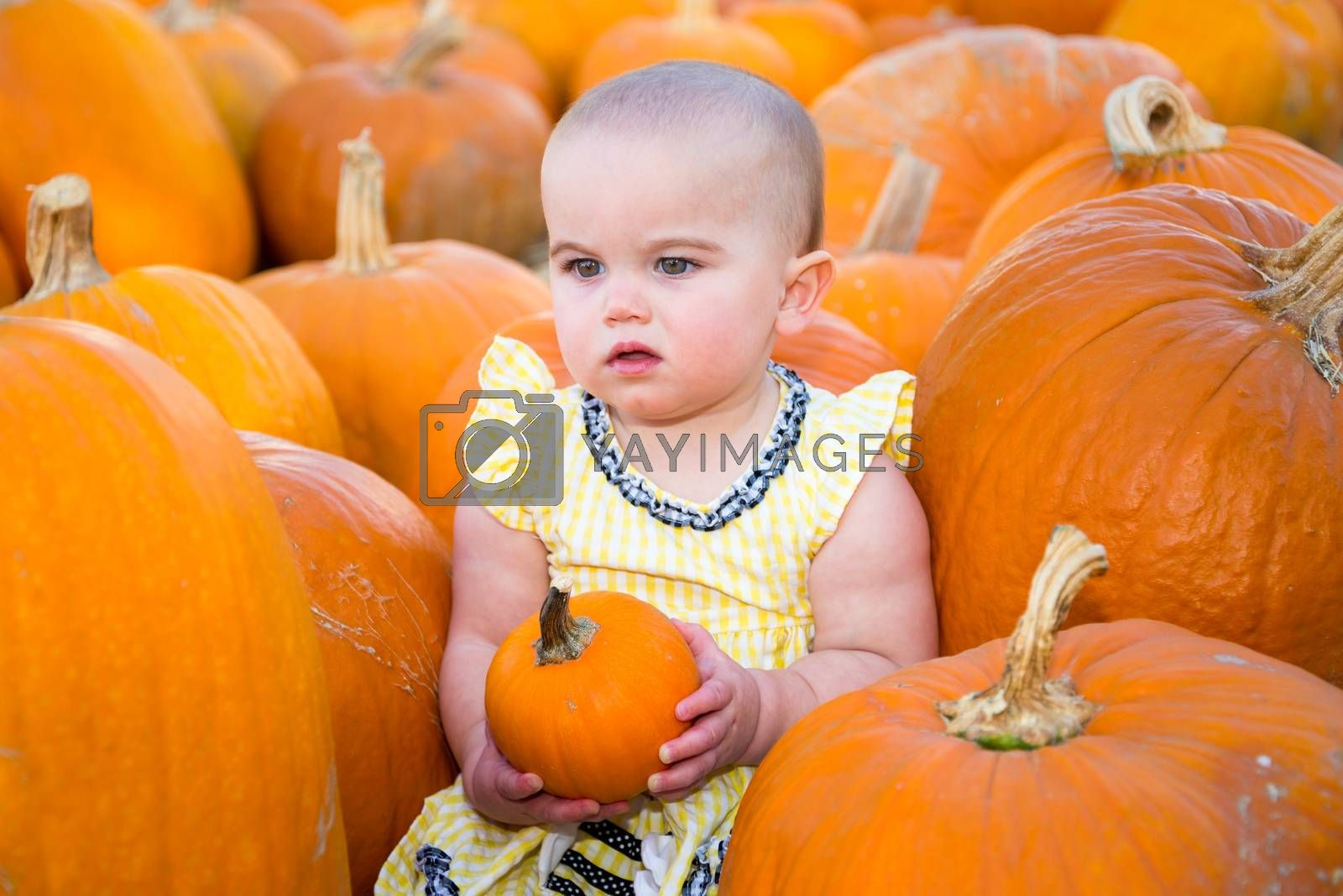 Adorable Pumpkin Patch Baby holding a small pumpkin while looking confused or unimpressed