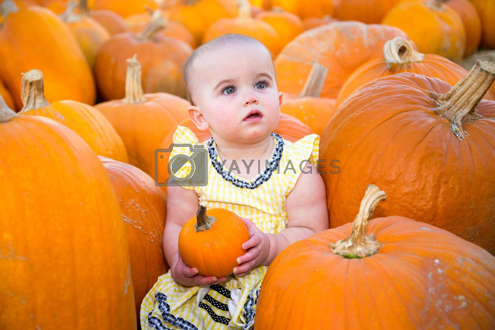 Cute Pumpkin Patch Baby holding a small pumpkin