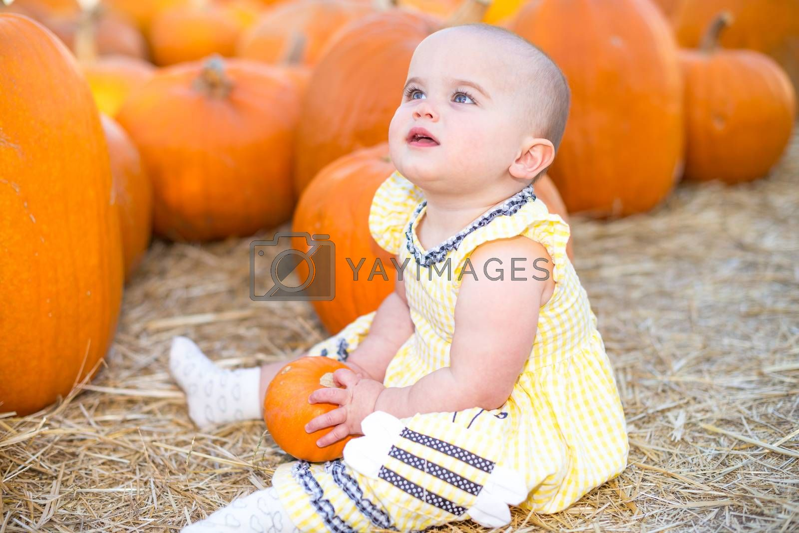 Cute Baby girl sitting on hay in a Pumpkin Patch