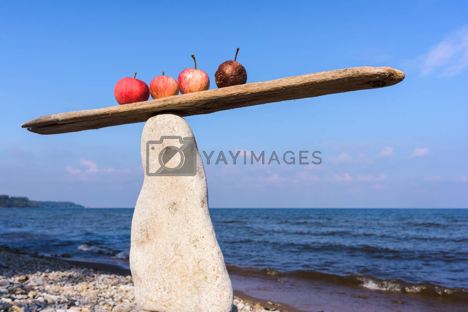 Fresh apples and rotten in balance on narrow plank