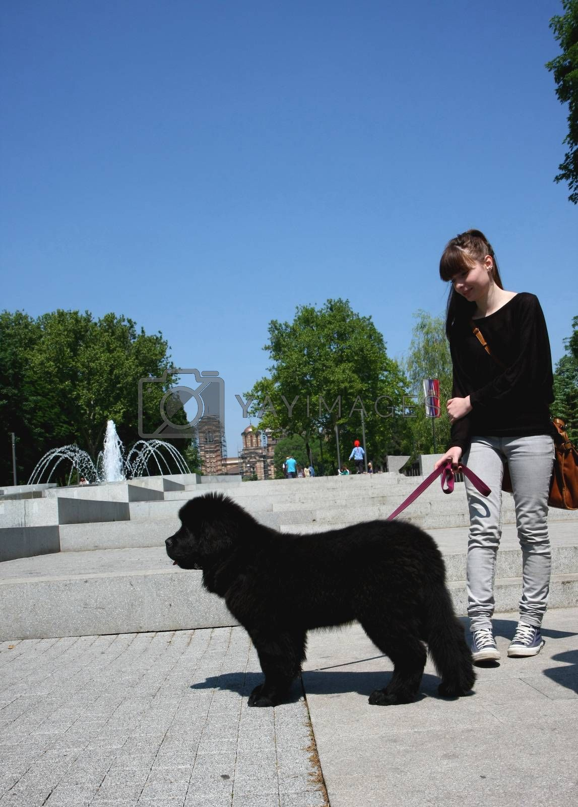 Cute Newfoundlander puppy with girl in public park