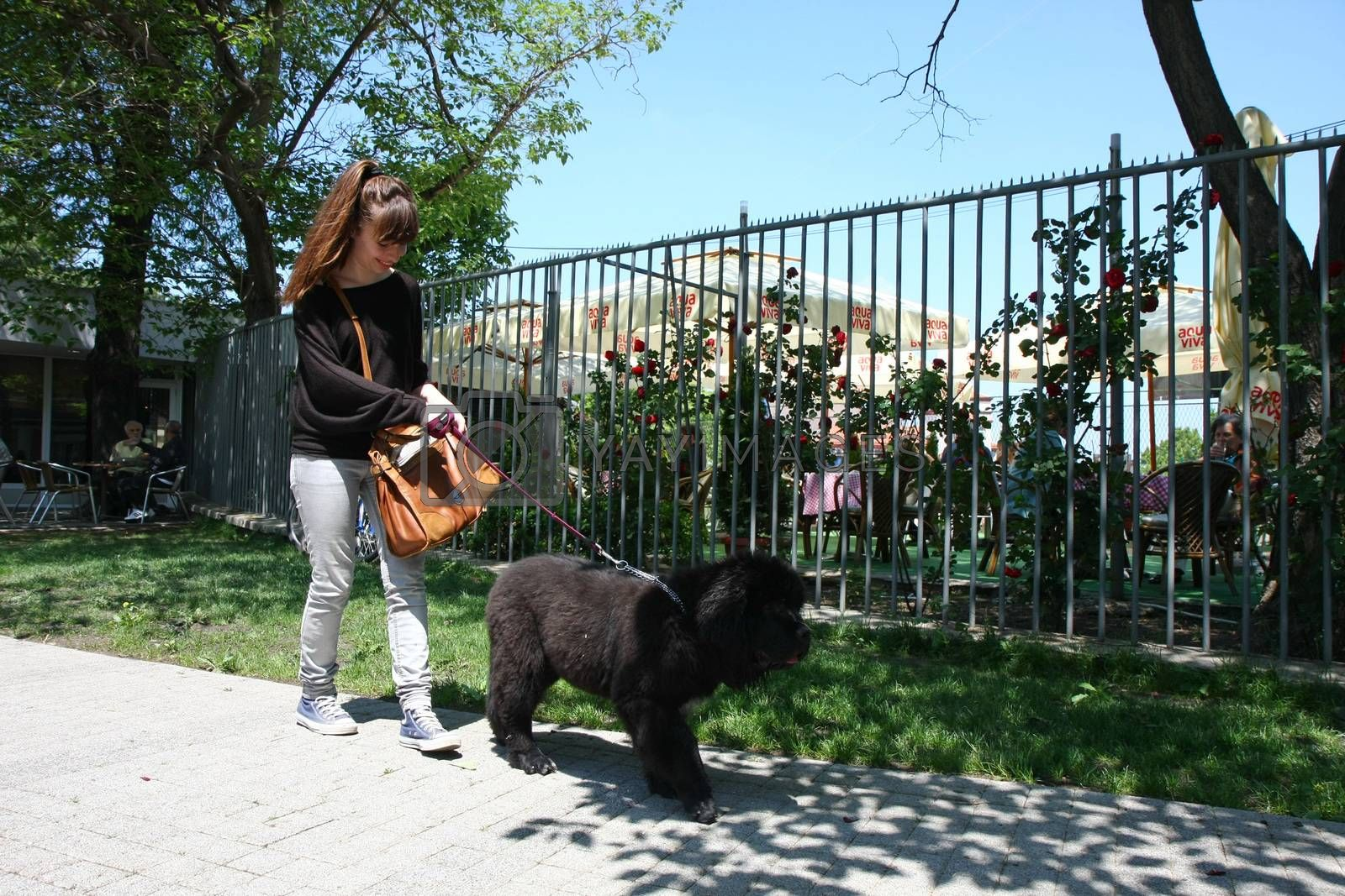 Girl in public park walking  with her Newfoundlander puppy