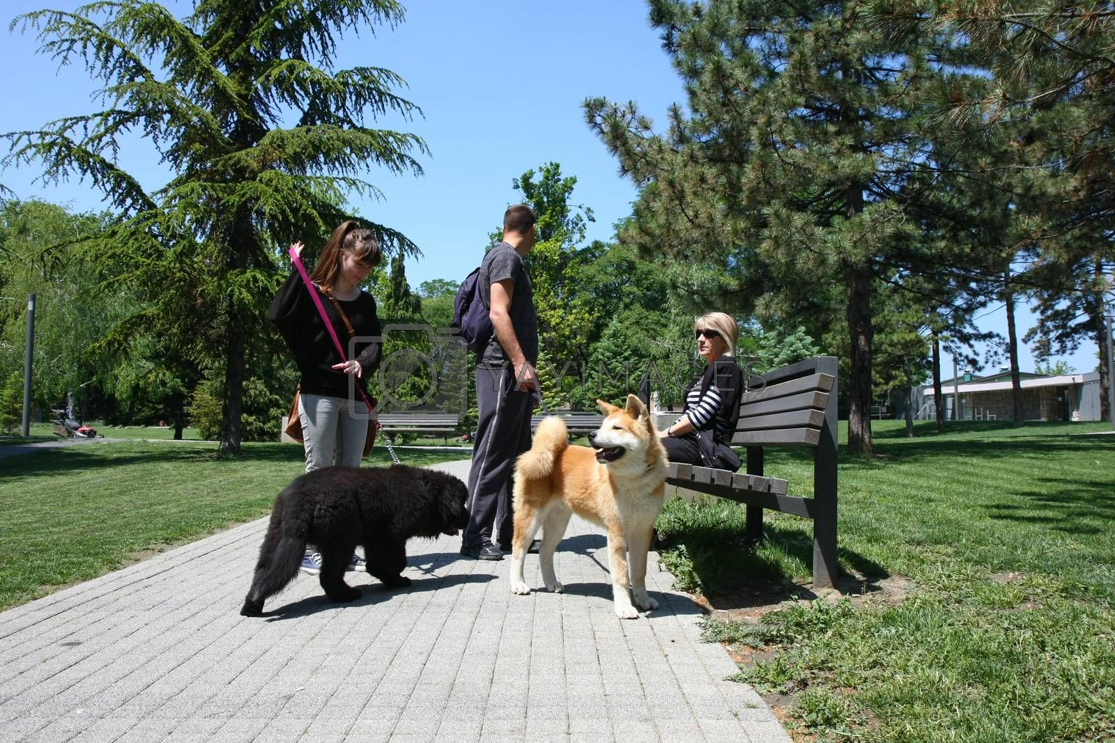 Puppies of Akita Inu and Newfaundlander resting  in public park