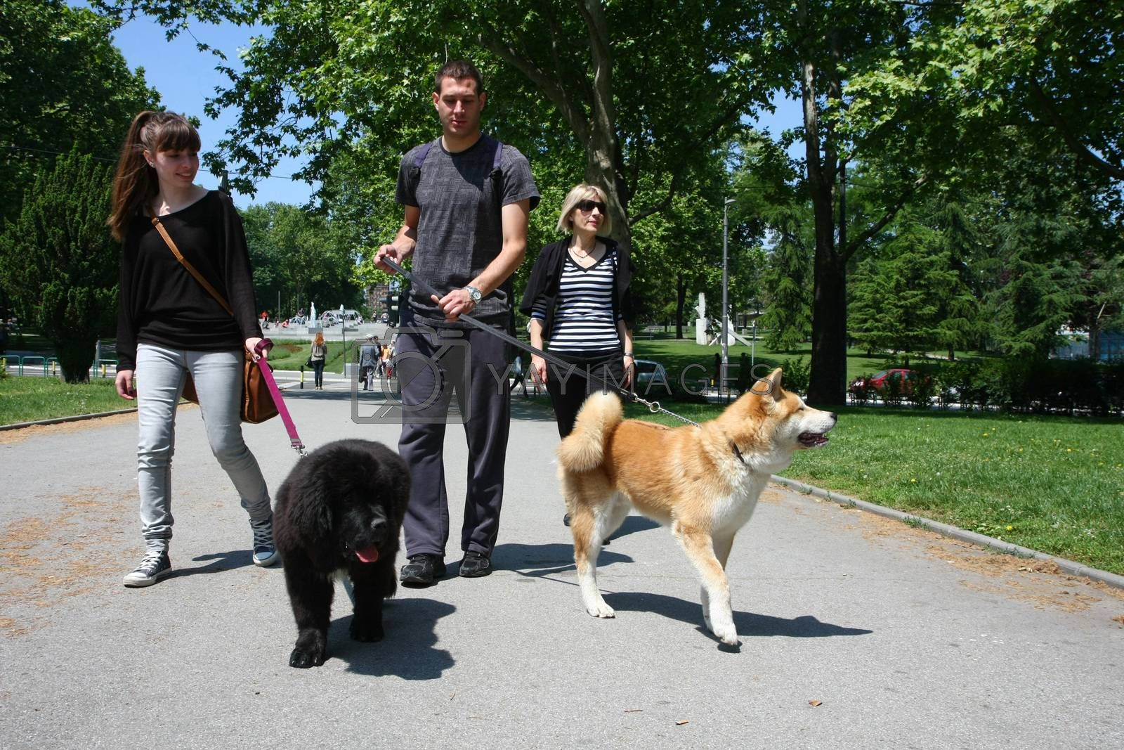 Walking with puppies by tdjoric