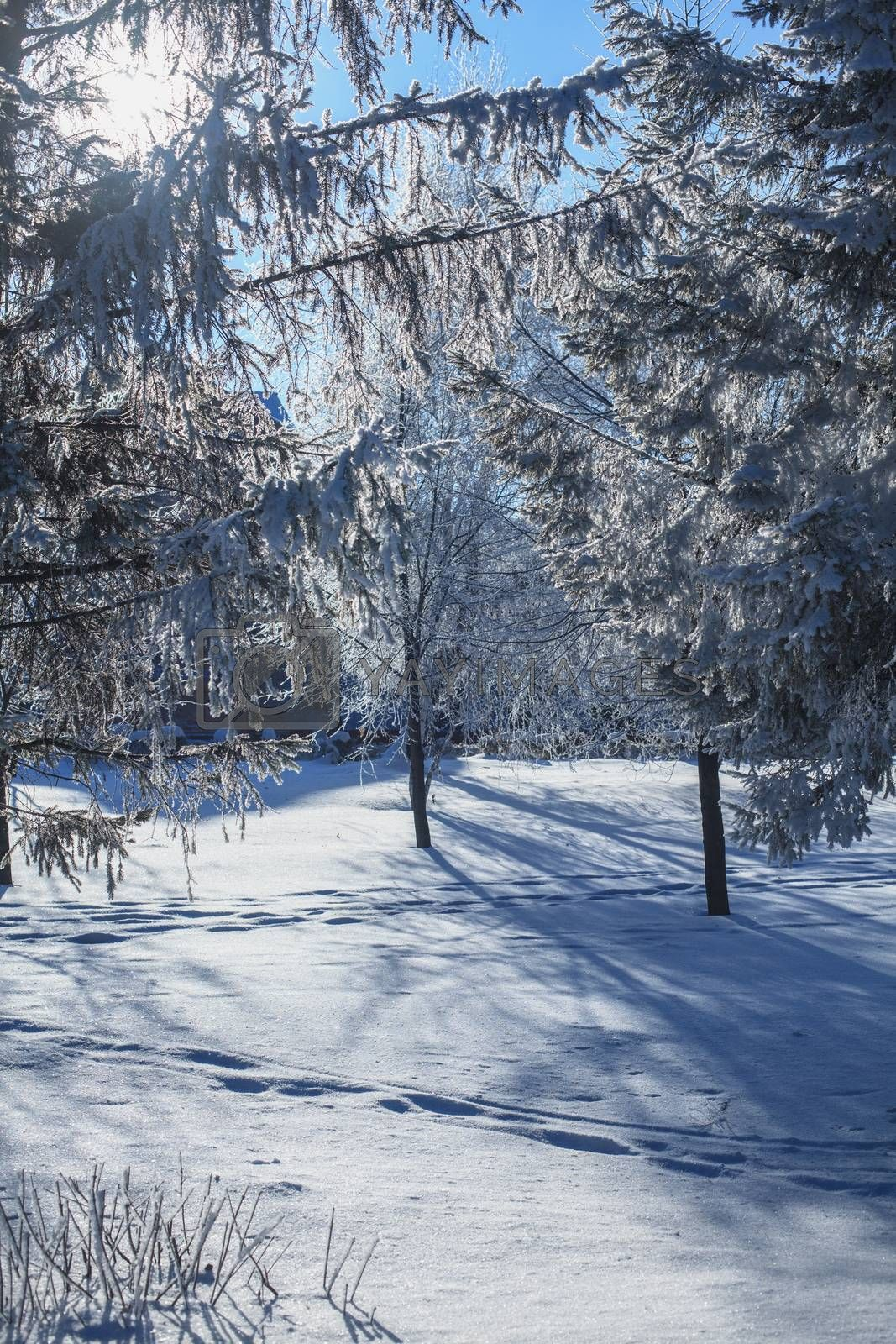 tree branches covered with snow by anelina