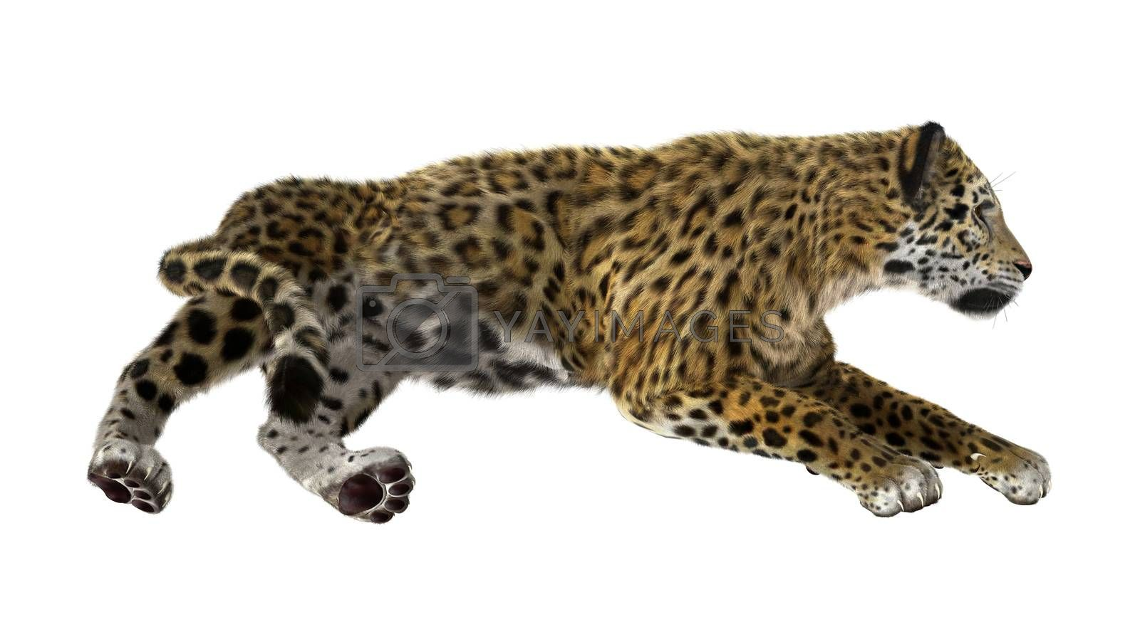 3D digital render of a big cat jaguar isolated on white background