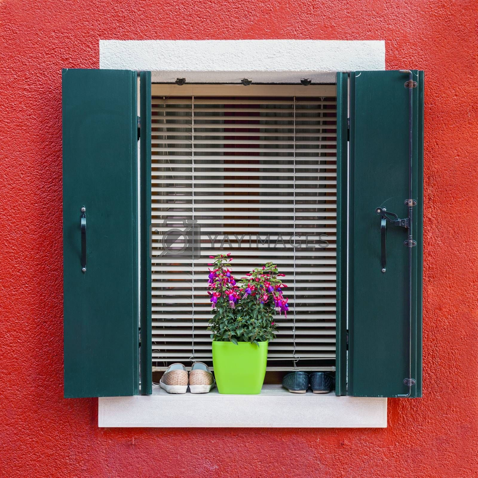 Traditional colorful residential house window with opened shutters and flower pot in venetian island of Burano