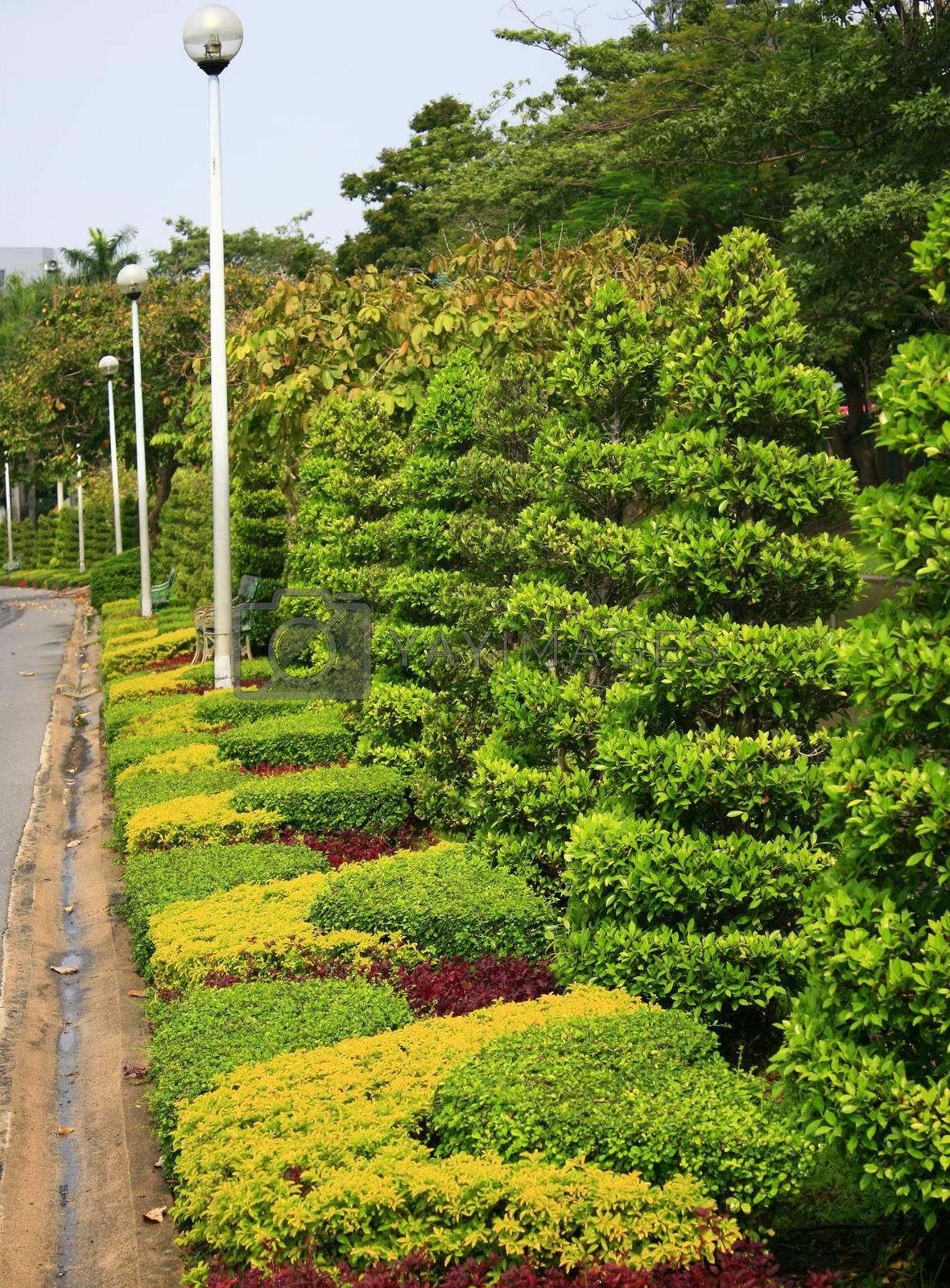 rows of tree in garden  by studio2013