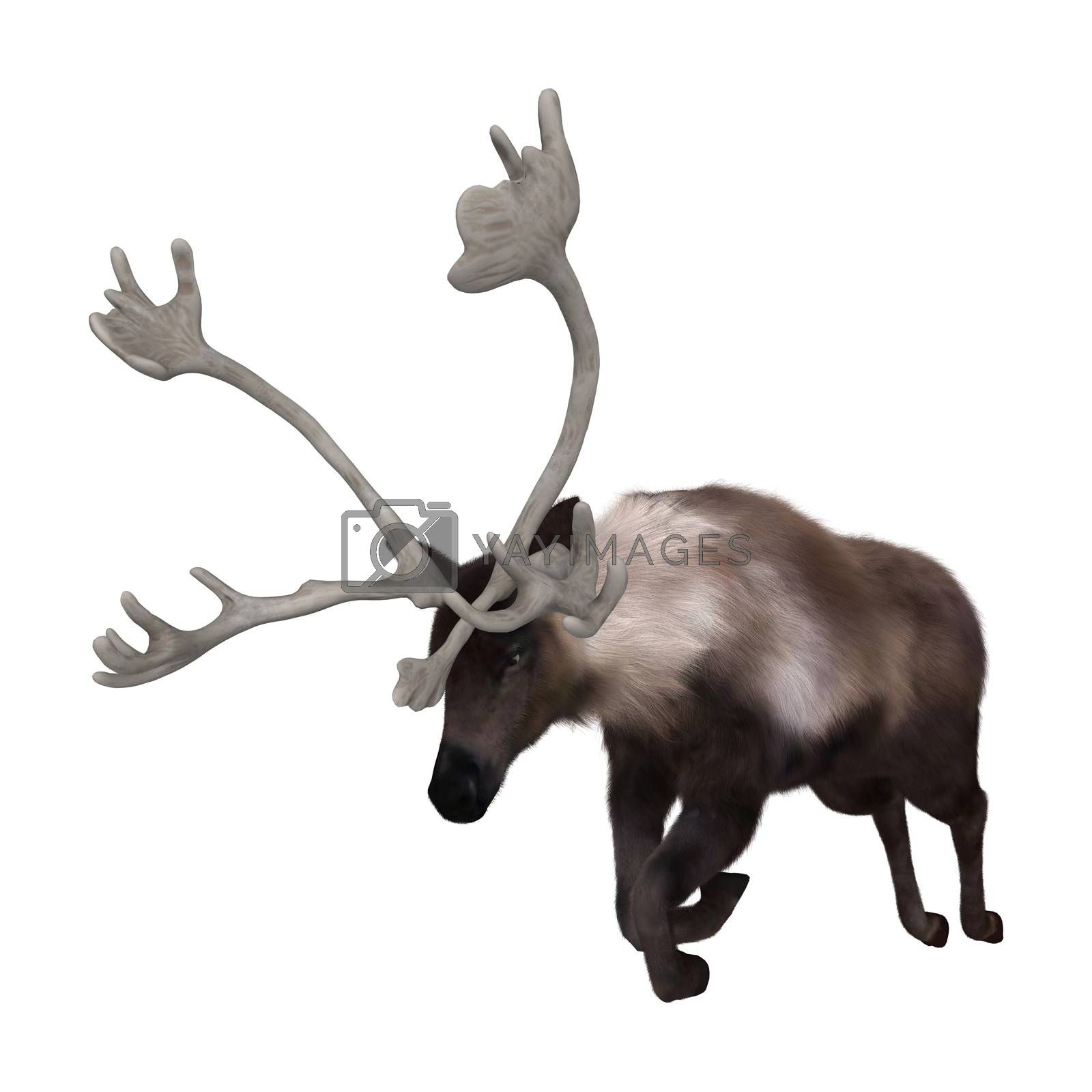 3D digital render of a caribou jumping isolated on white background