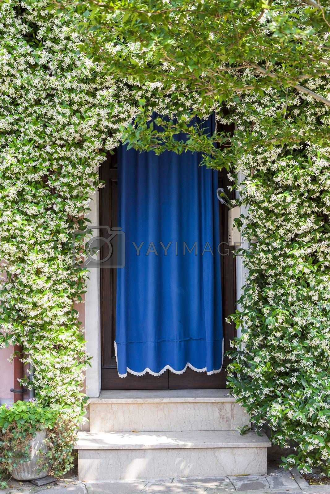 Home entrance covered with white blooming plants in venetian island of Burano